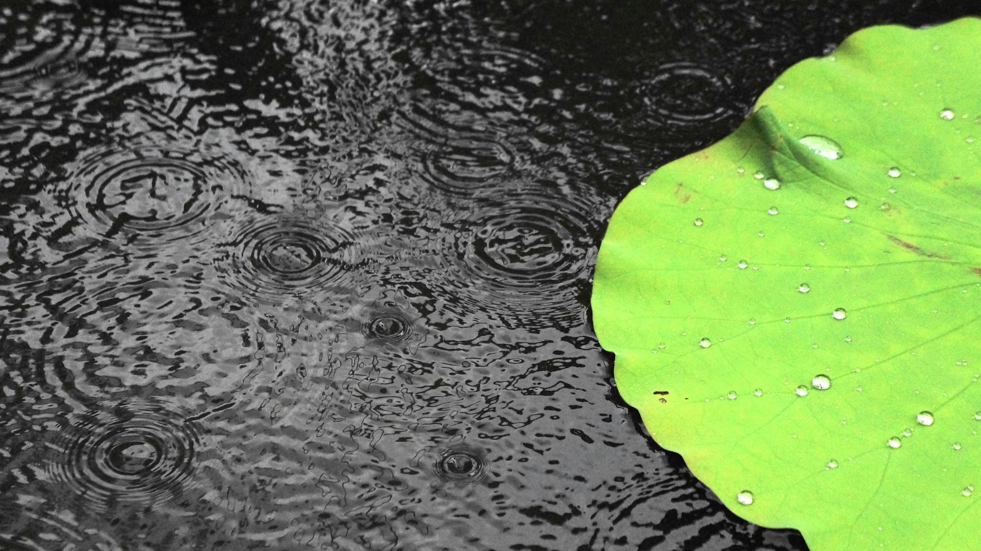 突然降ってきた法金剛院の強い雨