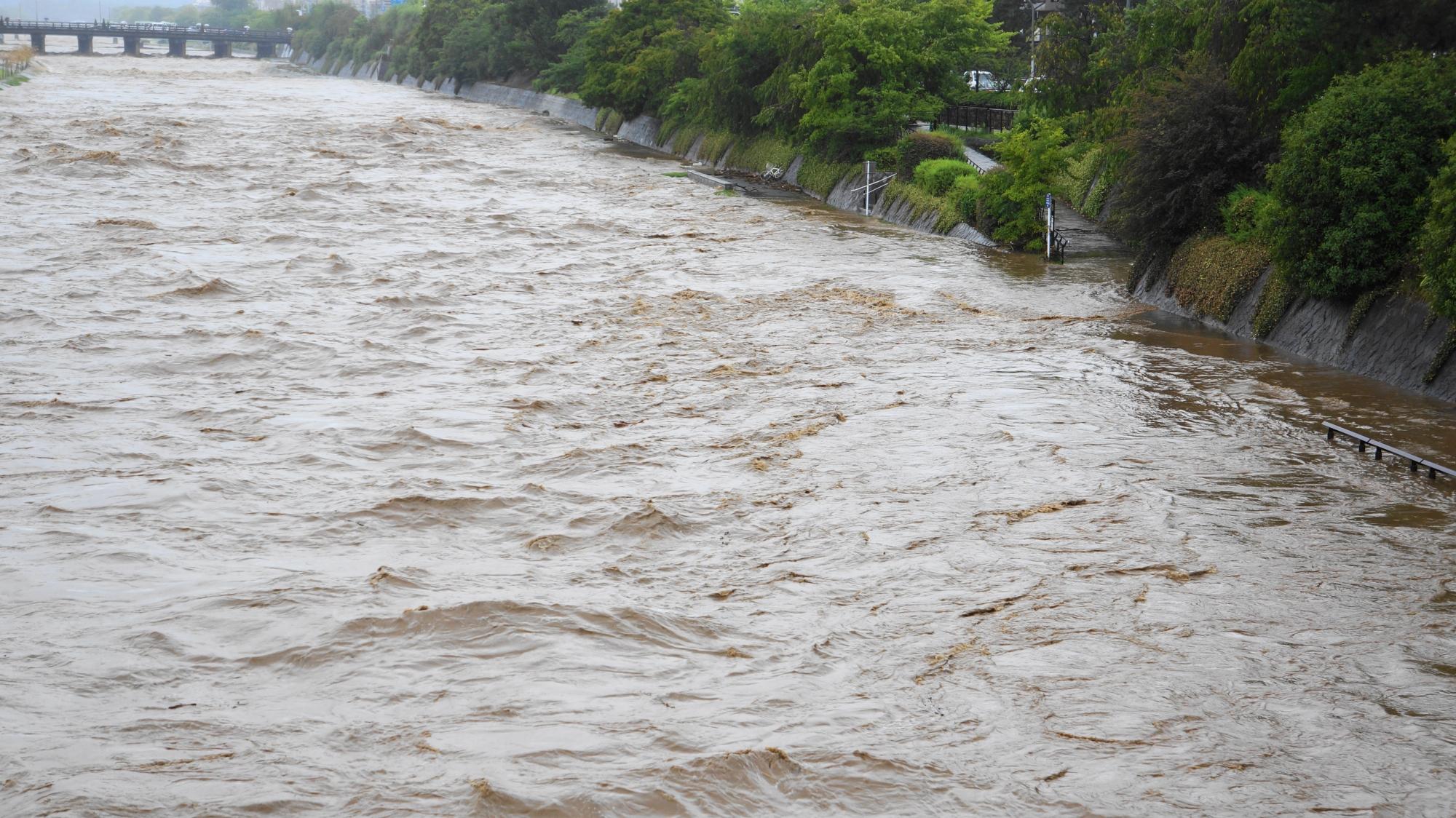 水かさが上がって溢れ出しそうな鴨川の濁流