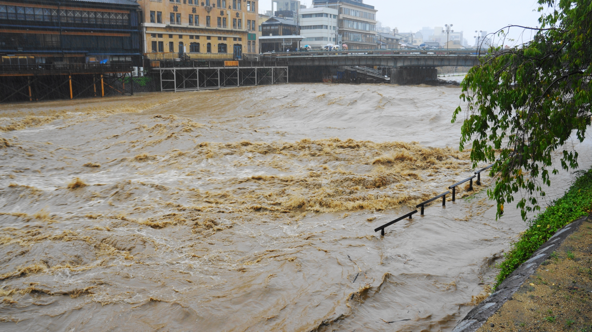 かなりの勢いで下流へ流れていく鴨川の濁流