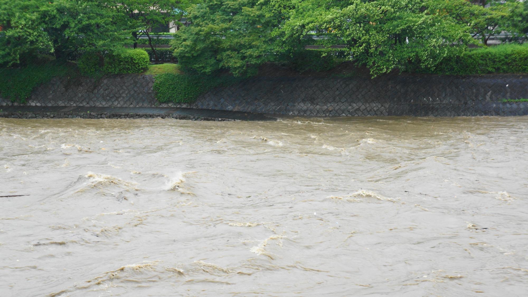 歩道は完全に水に浸かり危険な状態の鴨川