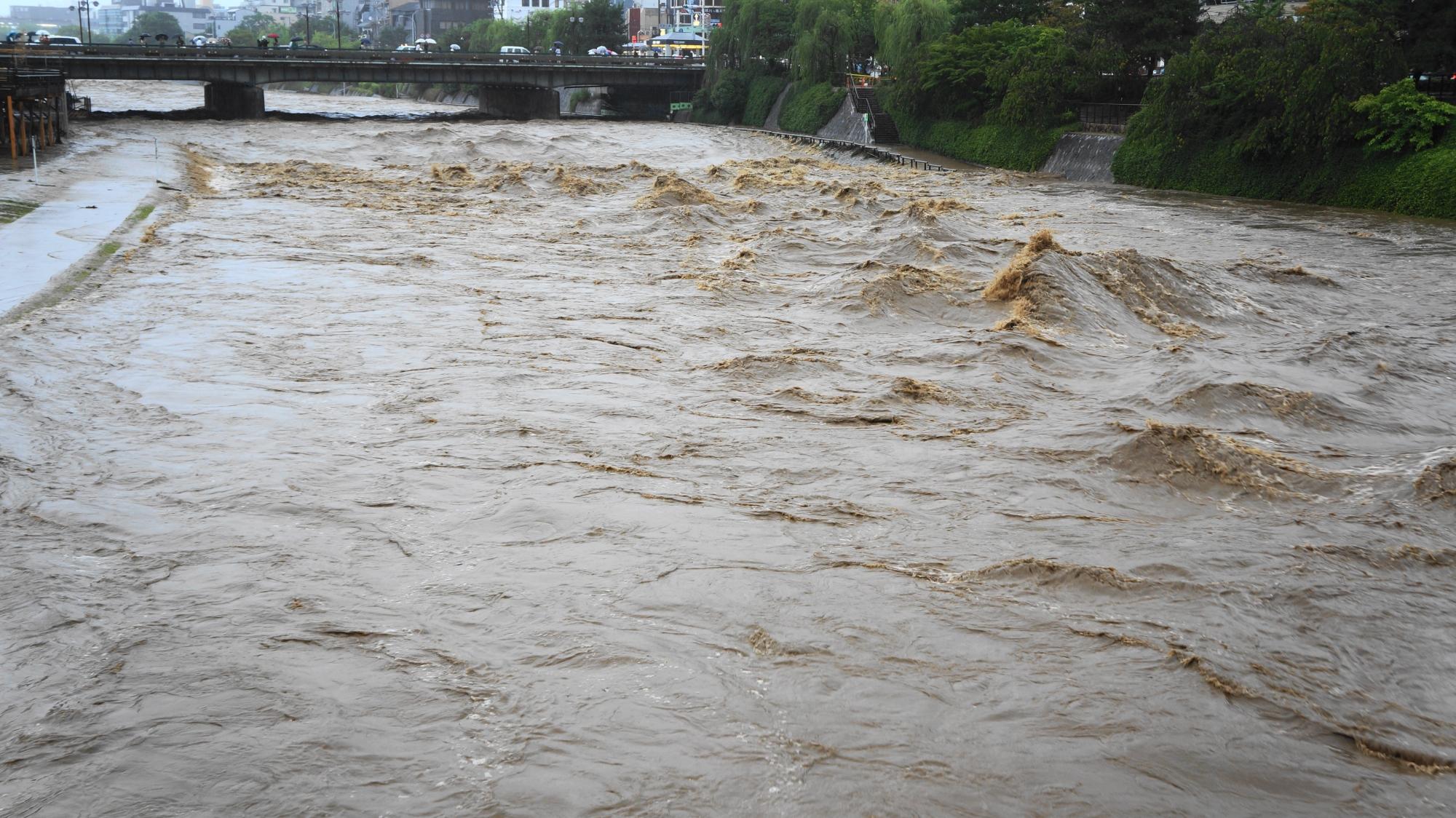 団栗橋から眺めた四条方面の2014年の台風11号の大雨で増水した鴨川