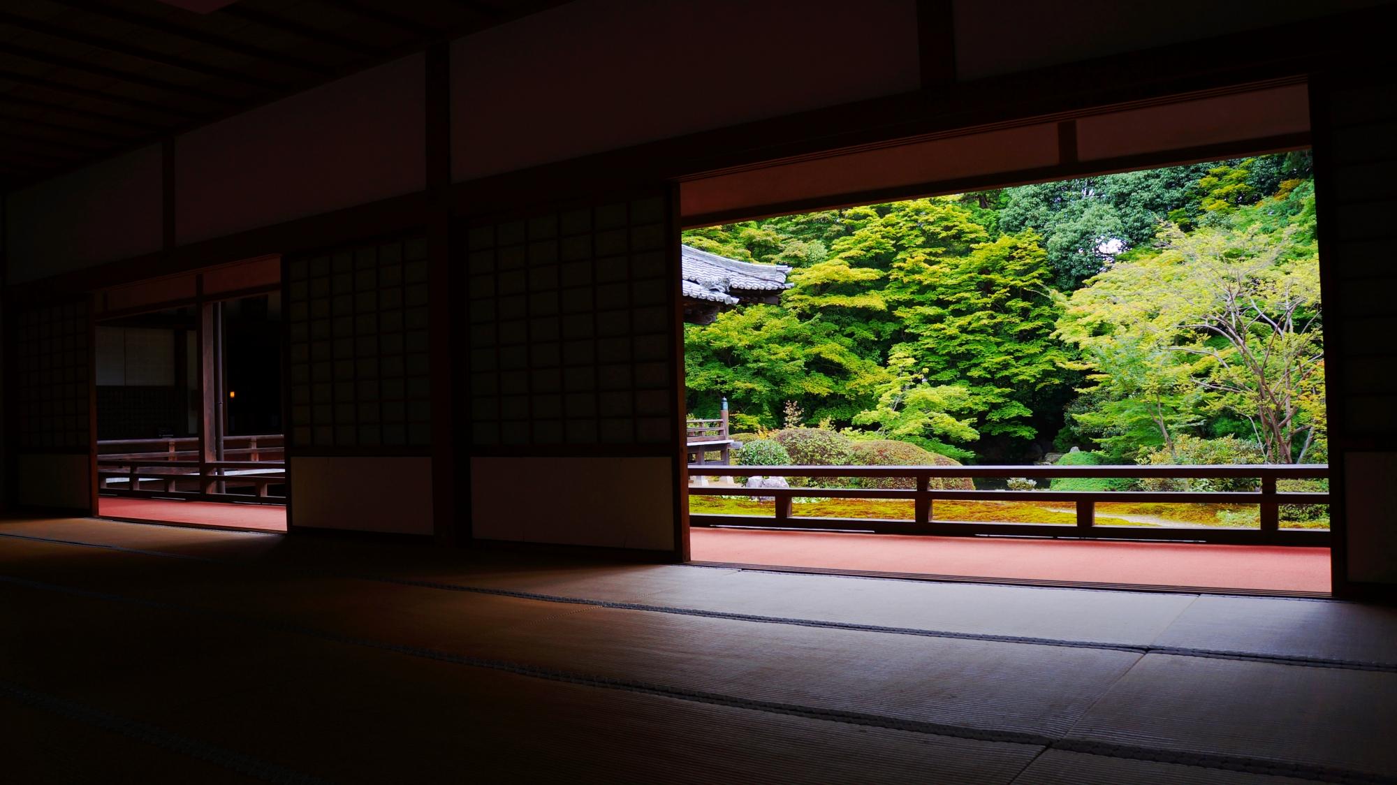 随心院 青もみじ 京都山科の静かな緑の時間