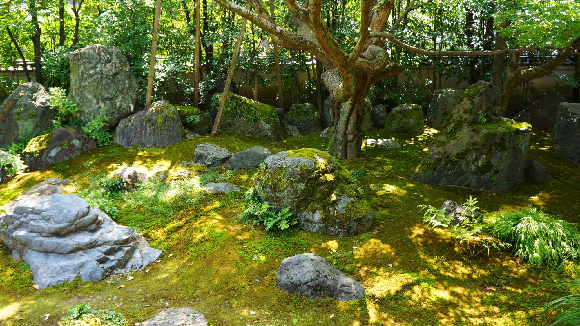 法輪寺(達磨寺)の方丈庭園に配される色んな形や大きさの岩