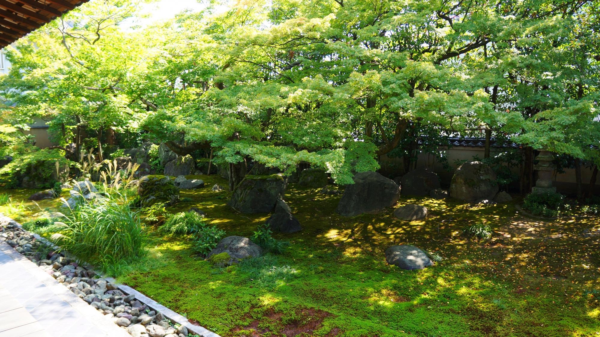 達磨寺の圧倒的な緑につつまれる方丈庭園