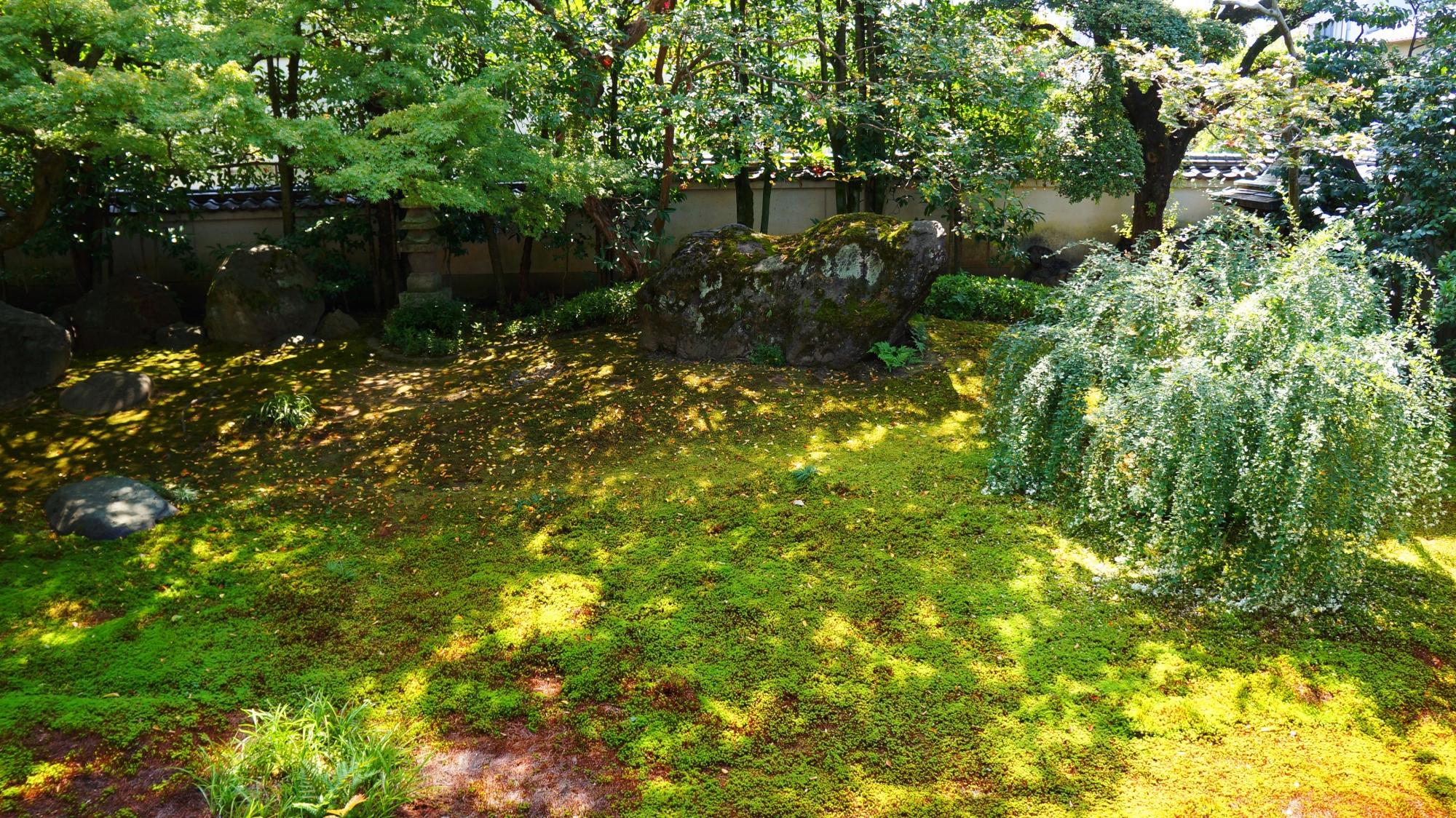 法輪寺(達磨寺)の下は鮮やかな苔に覆われた方丈庭園