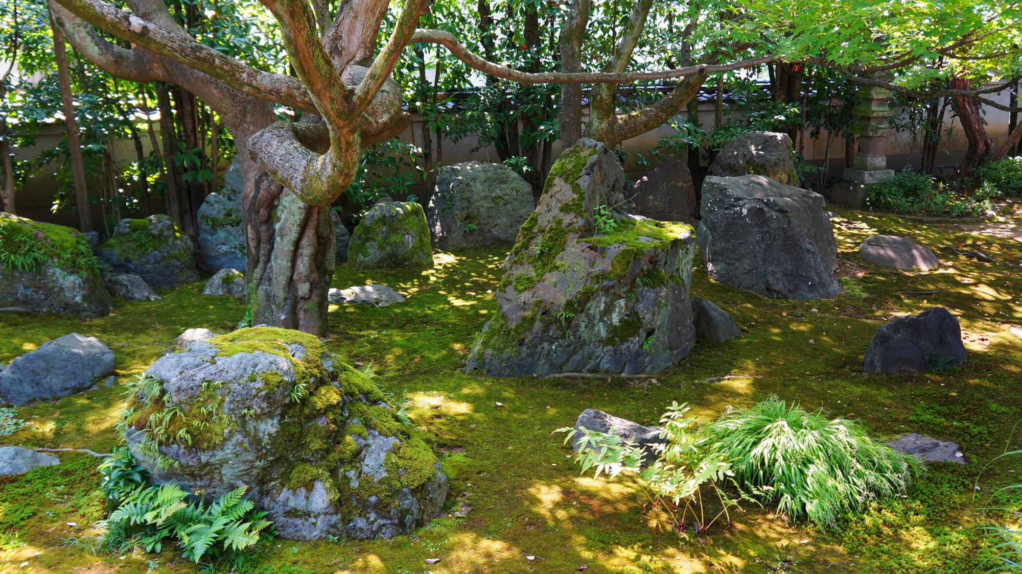 力強さの中にも風情が感じられる達磨寺の方丈庭園