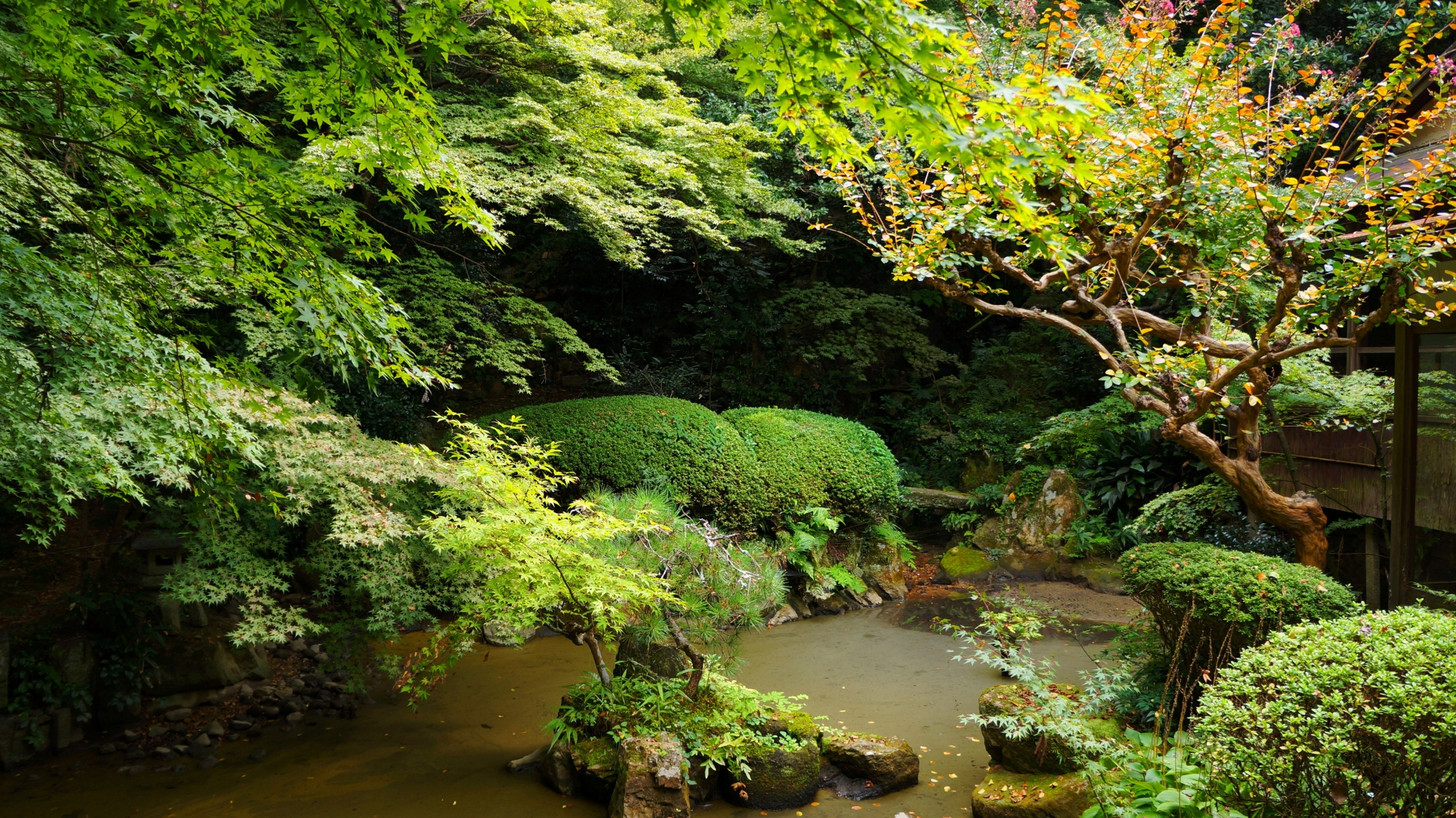 長楽寺 青もみじ 東山の奥にたたずむ静かな緑と庭園