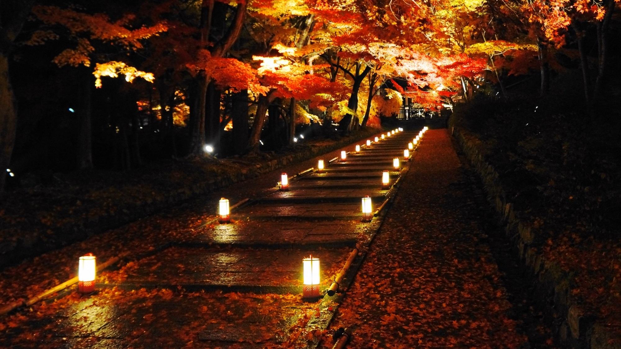 毘沙門堂 紅葉 ライトアップ 名刹の幻想的な紅葉