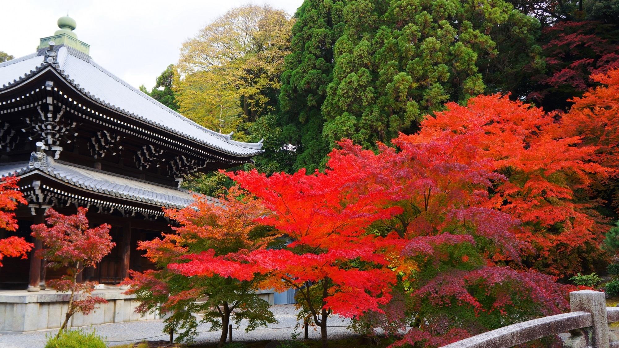 趣きある鮮やかな秋色