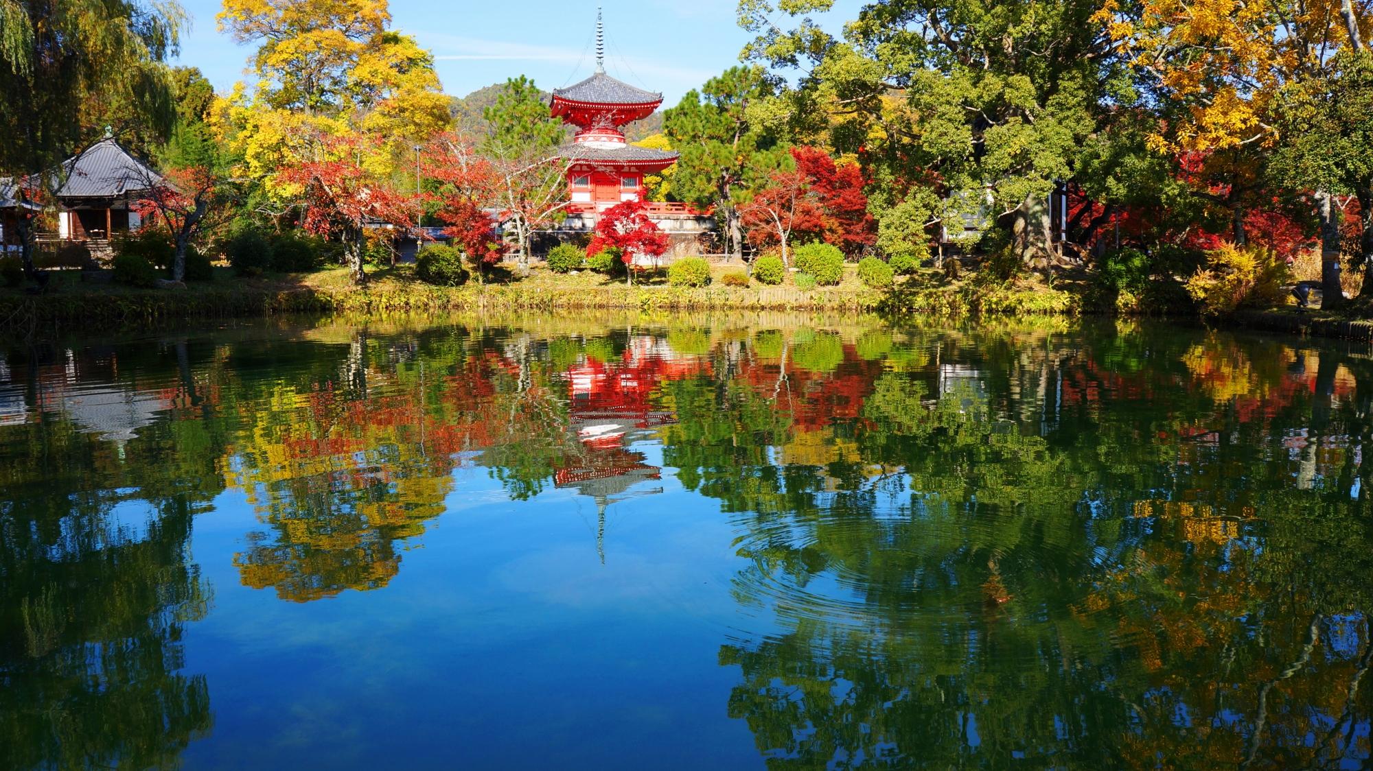 大覚寺 紅葉 格式ある美しい紅葉