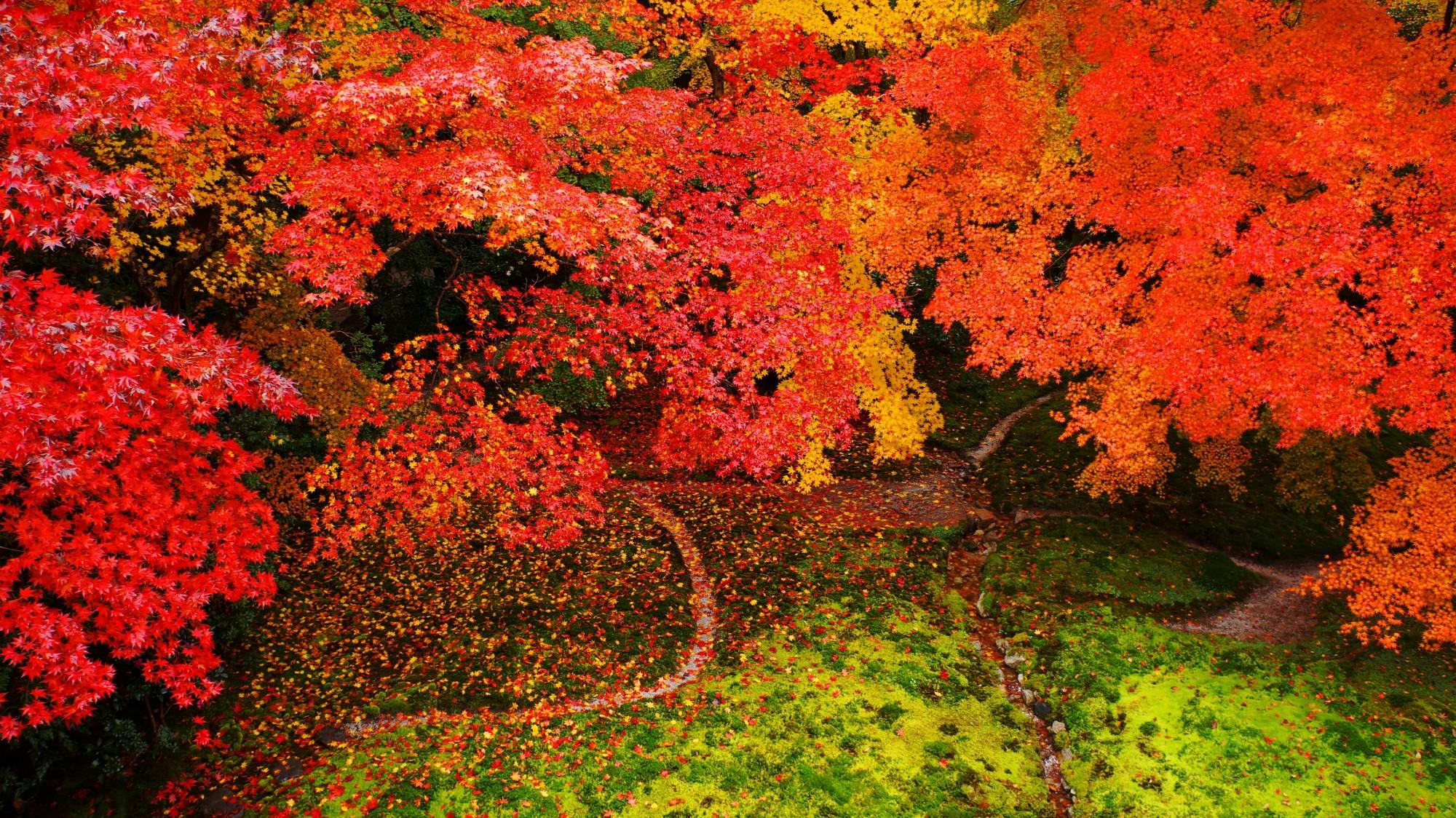 瑠璃光院 紅葉 究極の秋の彩り