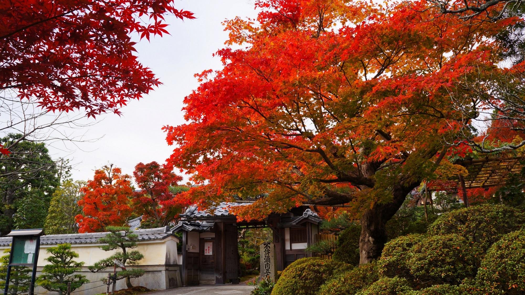 鮮やかな紅葉が溢れる洛西の穴場