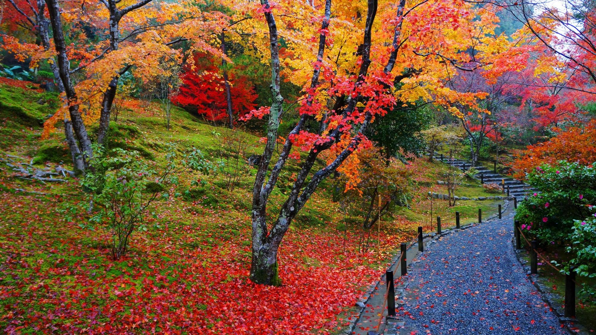 風情ある秋の彩りと散りもみじ