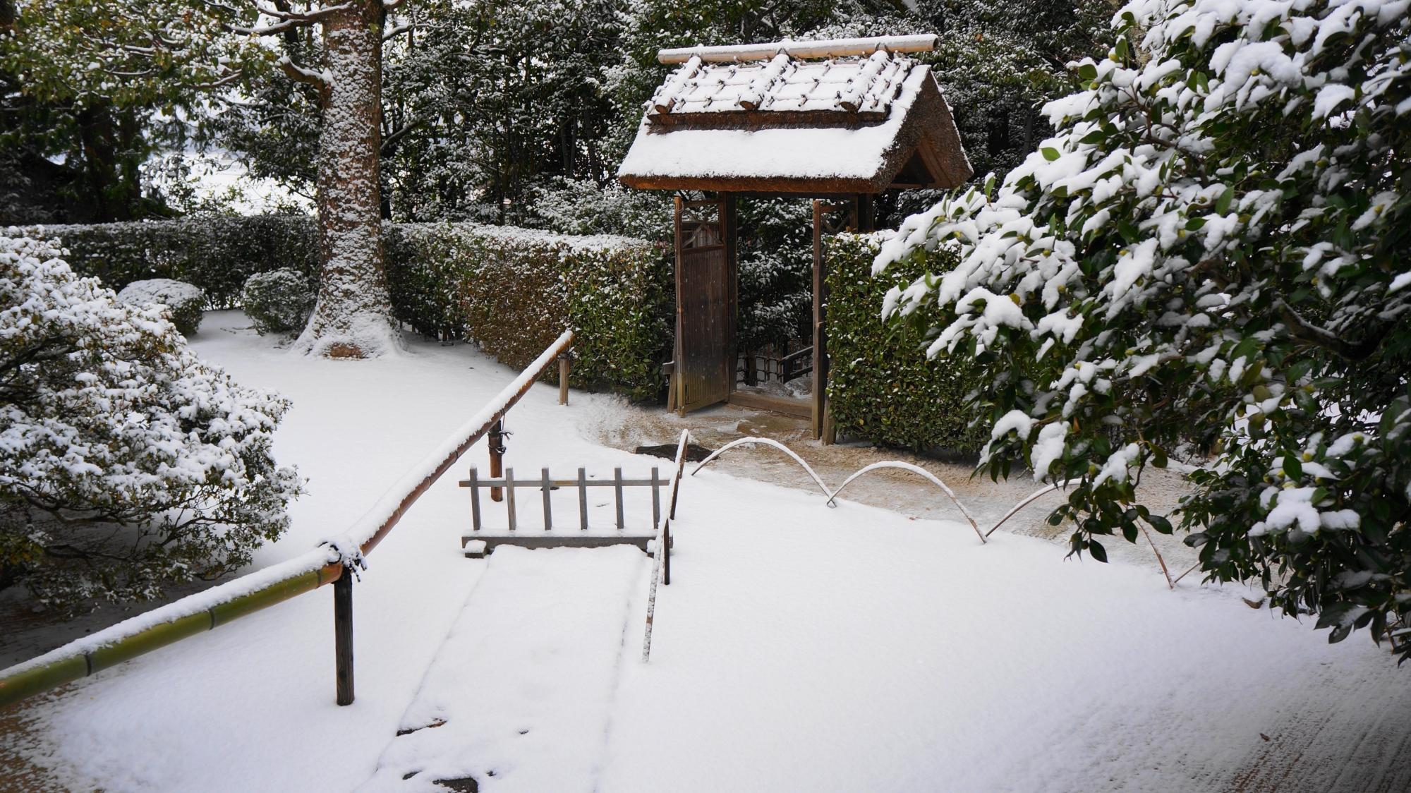 詩仙堂の雪の老梅関