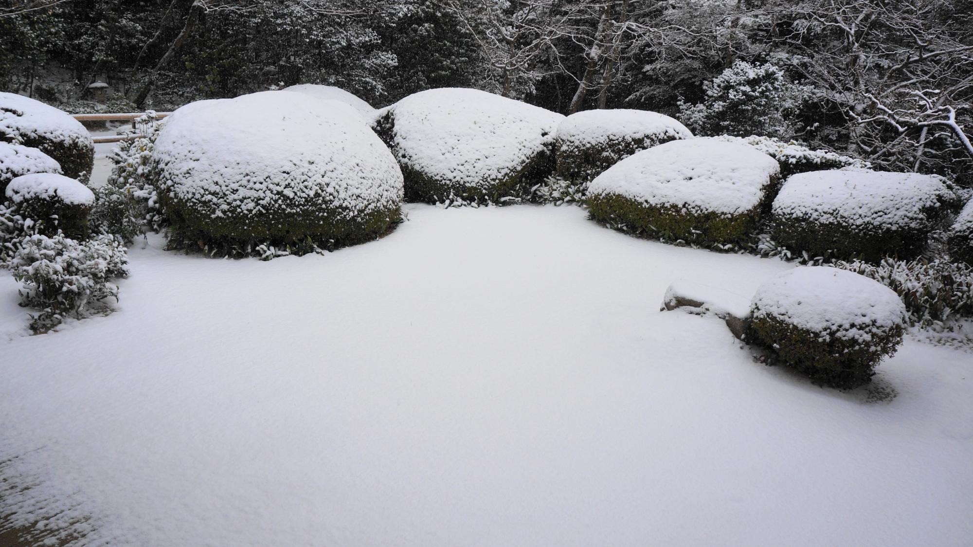 詩仙堂のサツキと白砂の書院前庭園の雪景色