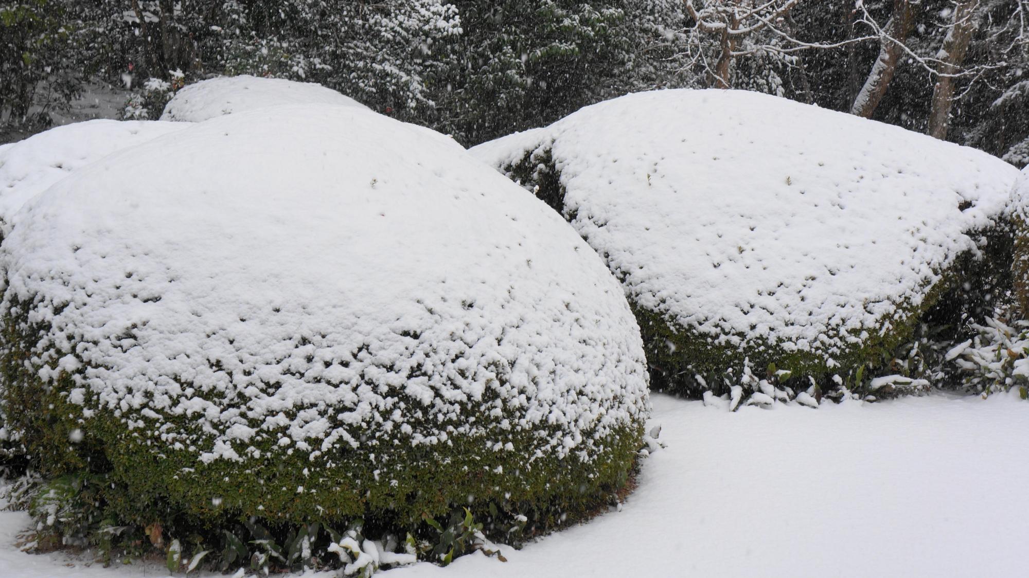 何となく優しく柔らかい雪景色