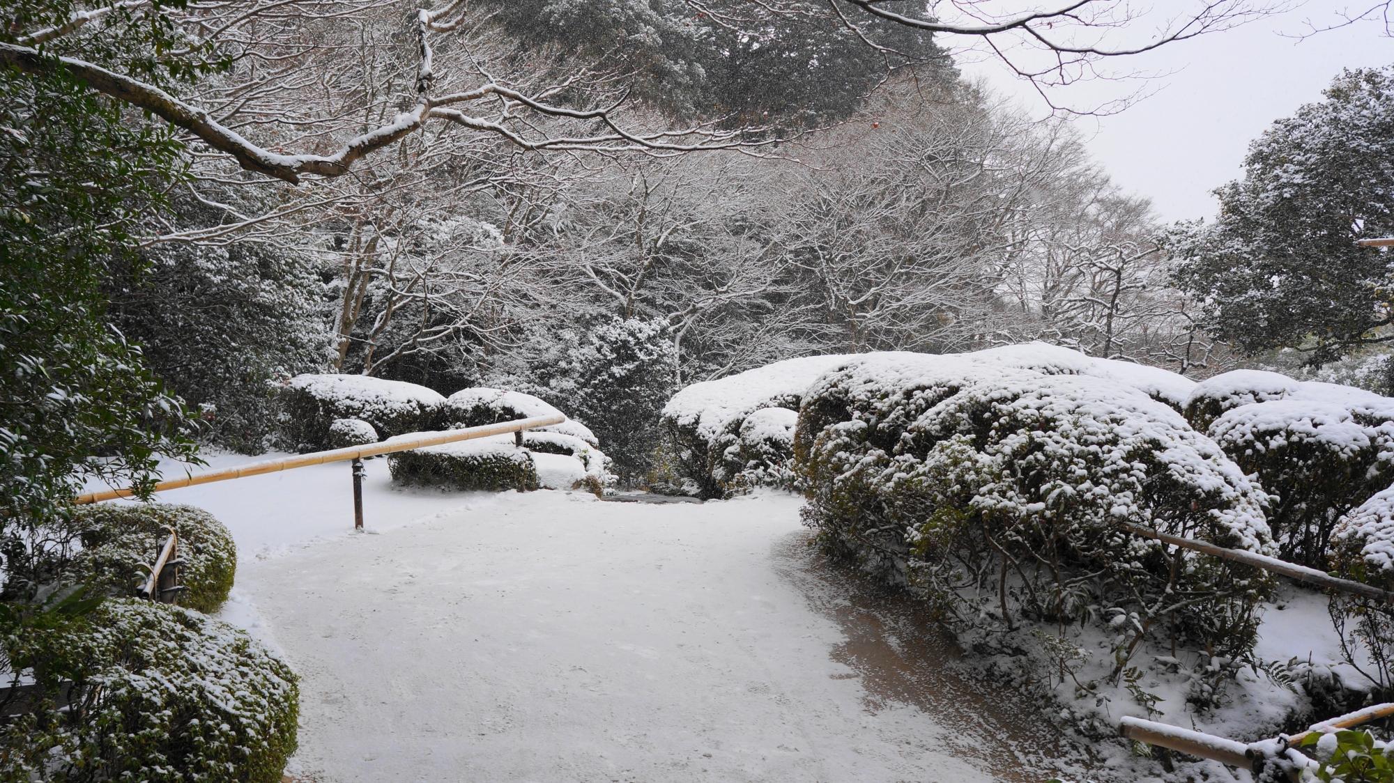 詩仙堂のもみじの雪の花
