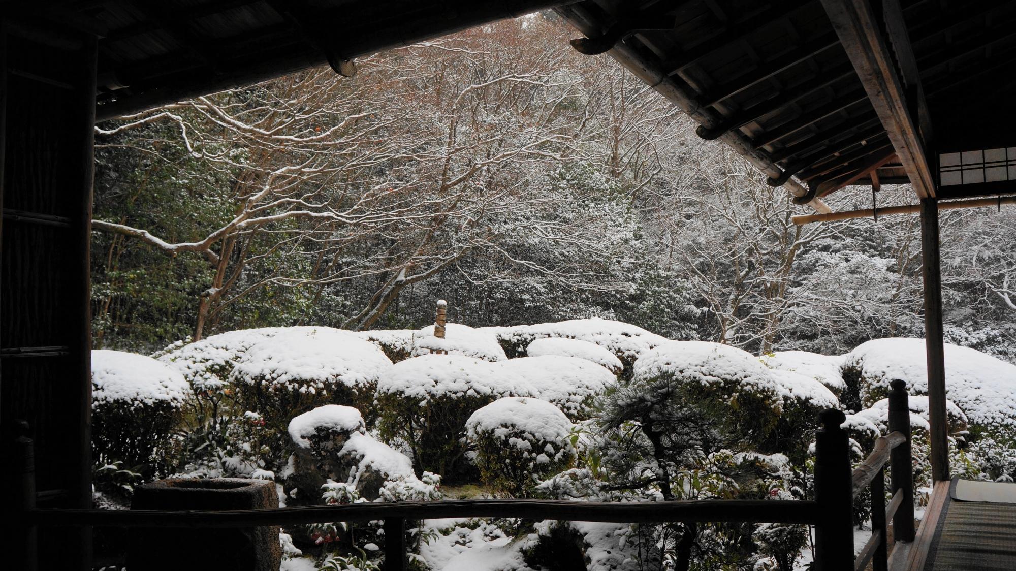 庇の下からのぞく雪につつまれたサツキの刈り込み