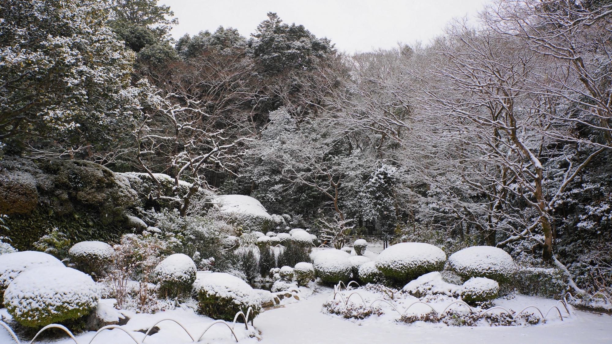 華やかな雪の花が咲く詩仙堂