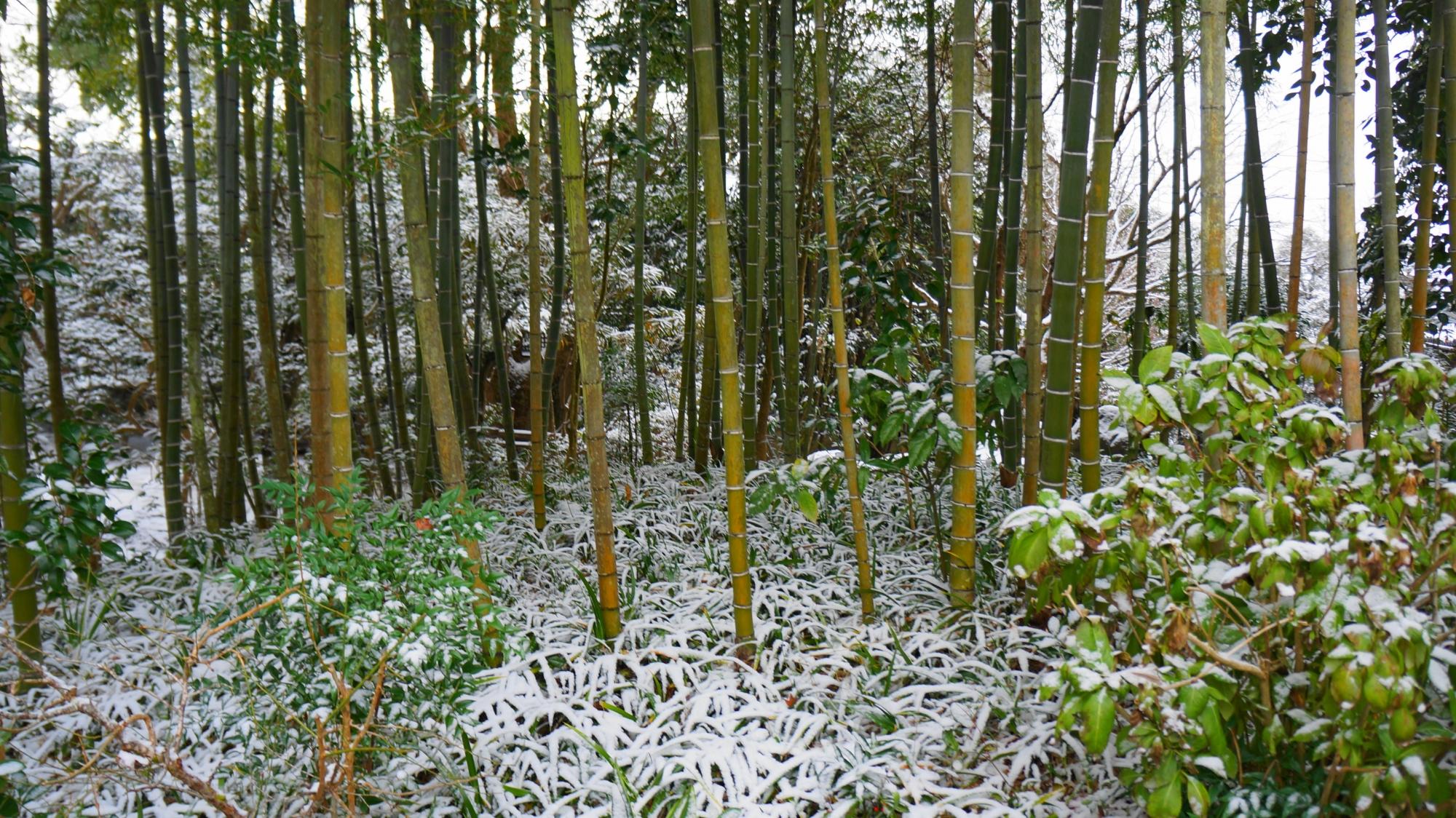 詩仙堂の華やかに雪が積もる笹