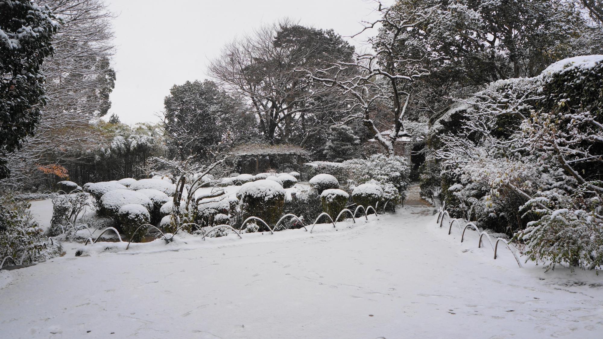 サツキやもみじなどの木々も白くそまる詩仙堂
