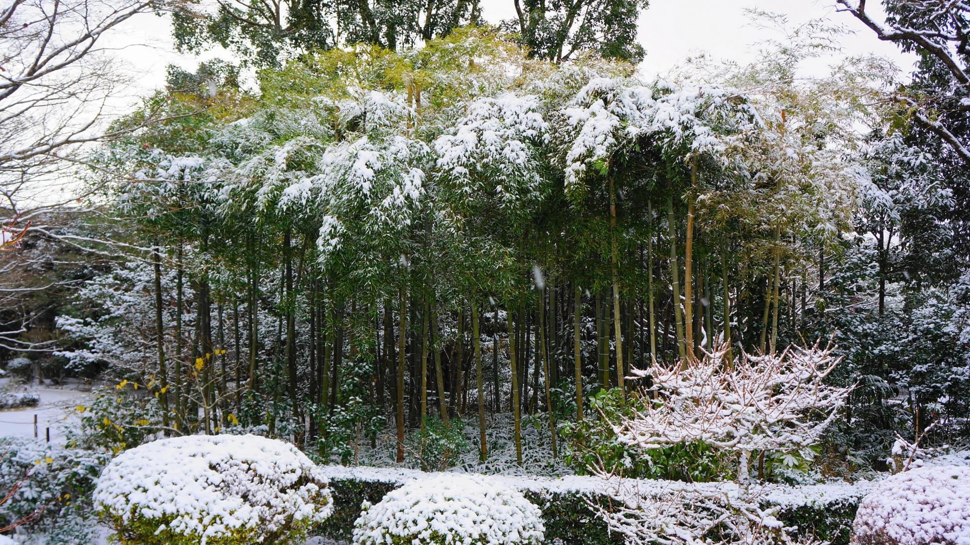 詩仙堂の幻想的な雪化粧の竹林