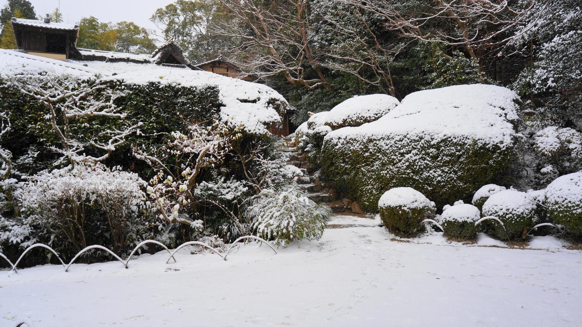 大きなサツキも綺麗に雪化粧した詩仙堂