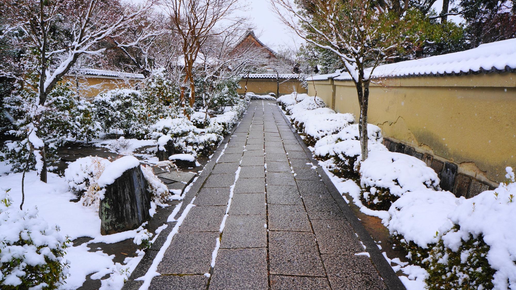芳春院の雪につつまれた参道両脇の岩や刈り込み