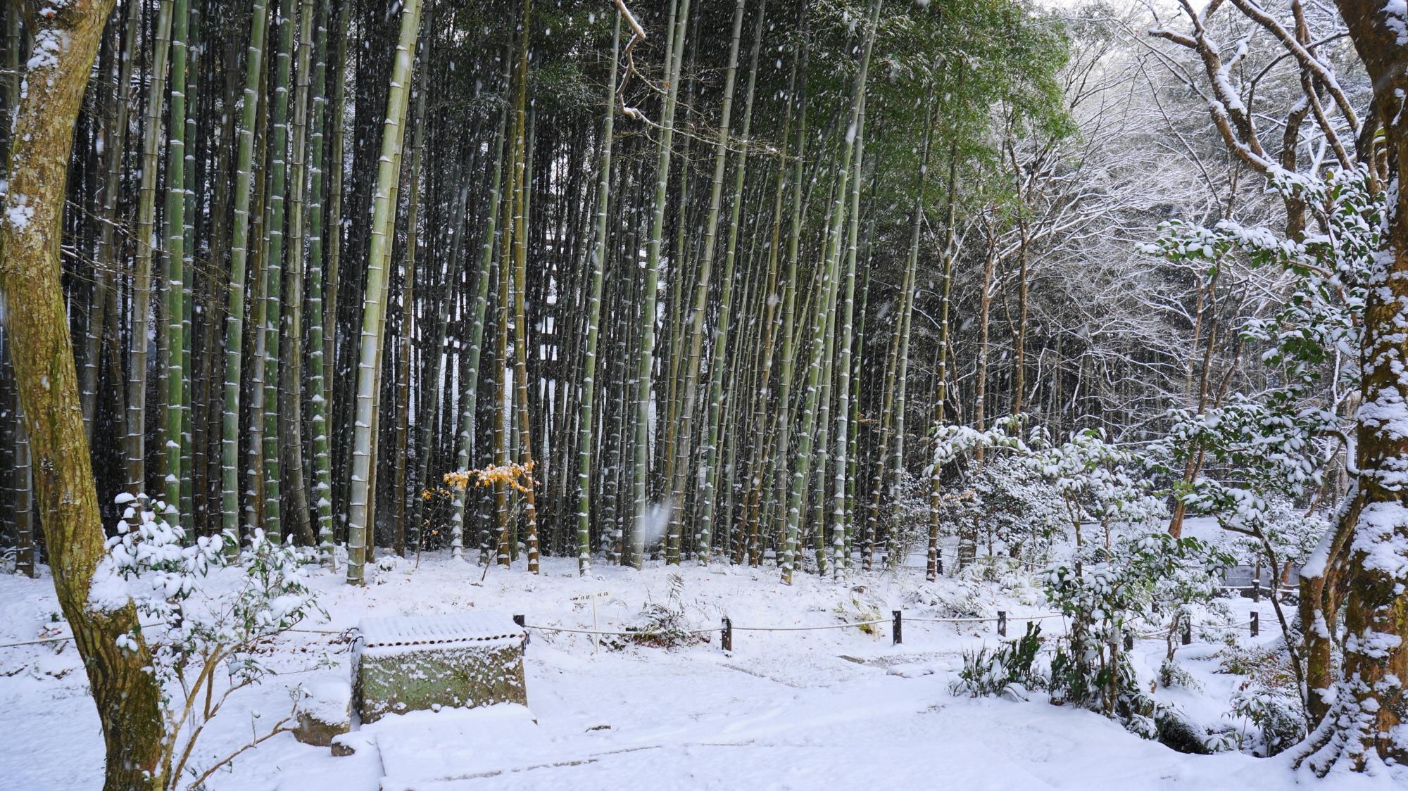 圓光寺の雪の応挙竹林