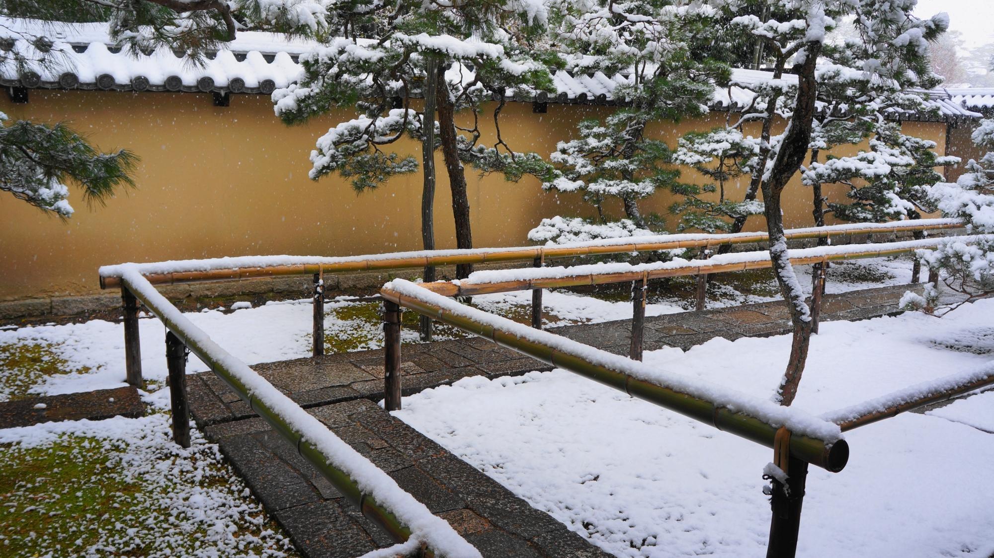 松の木などにも雪が積もった高桐院