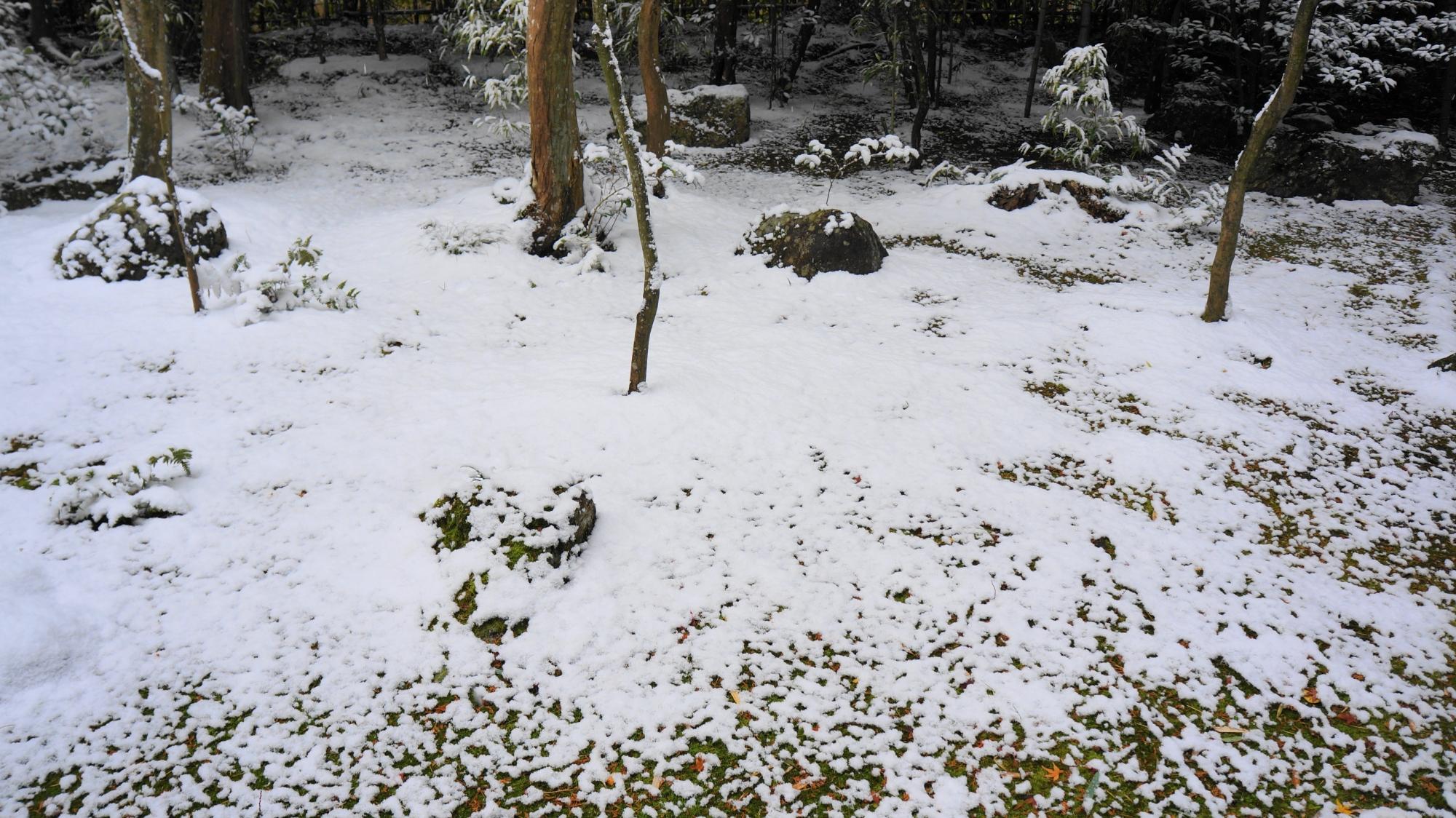 高桐院の雪化粧した苔や岩