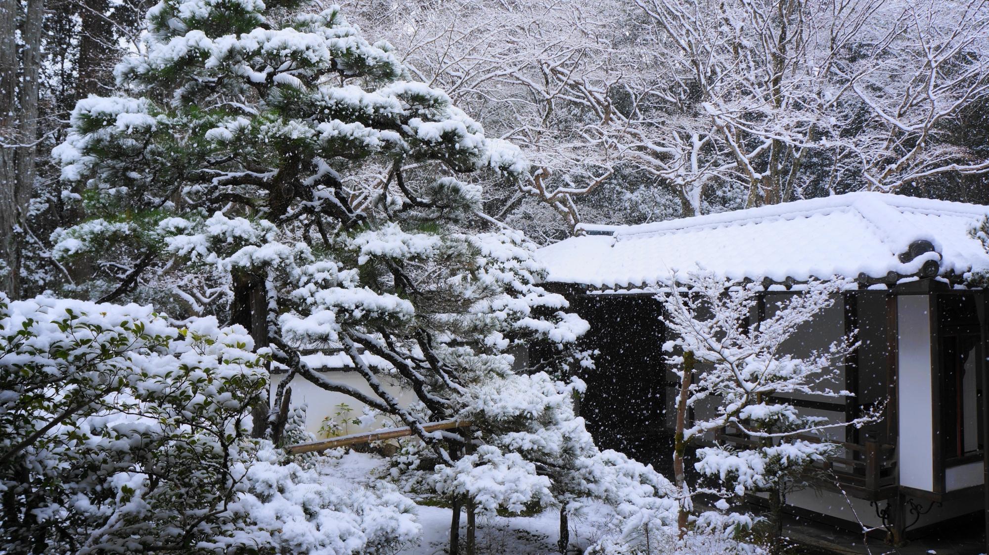 高桐院の唐門の雪景色
