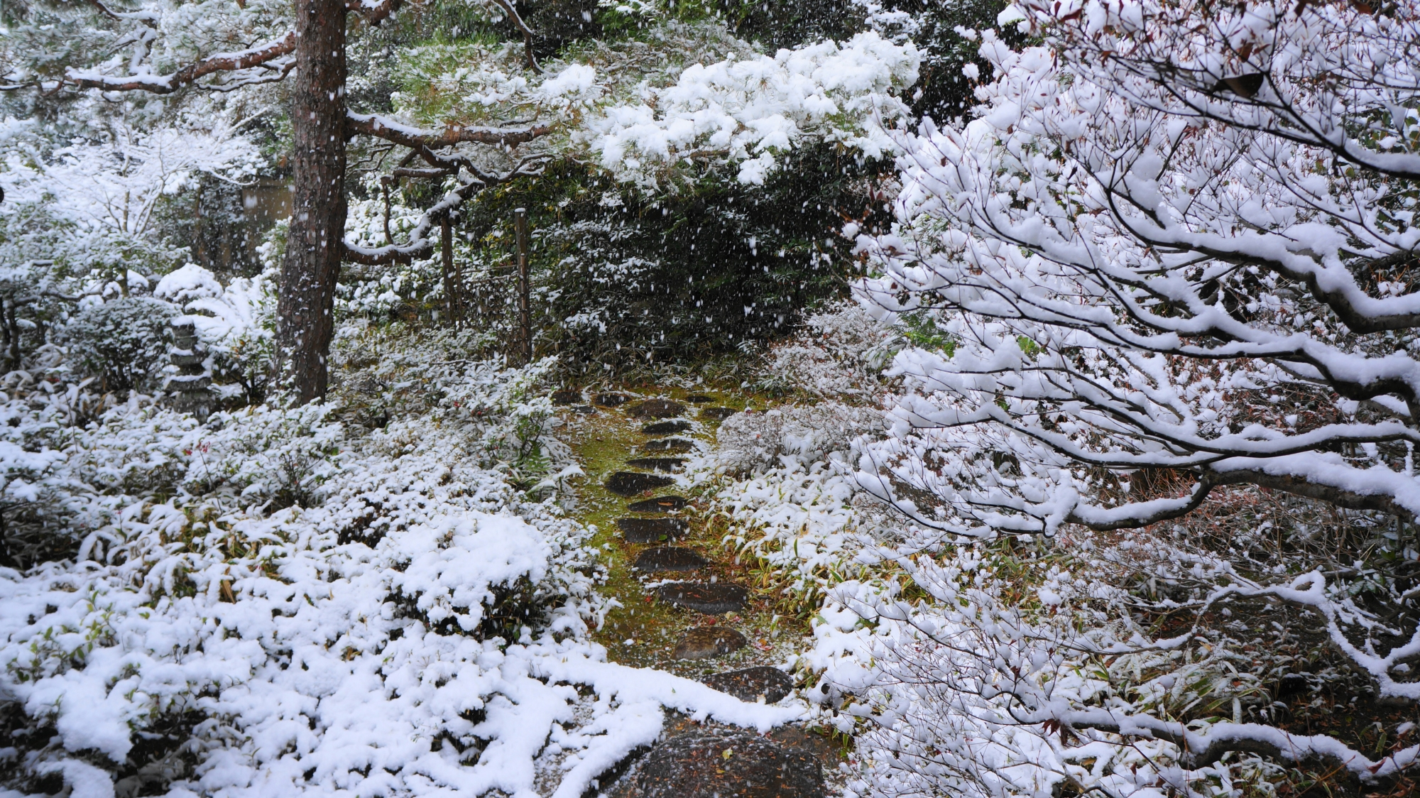 高桐院庭園の美しく華やかな雪景色
