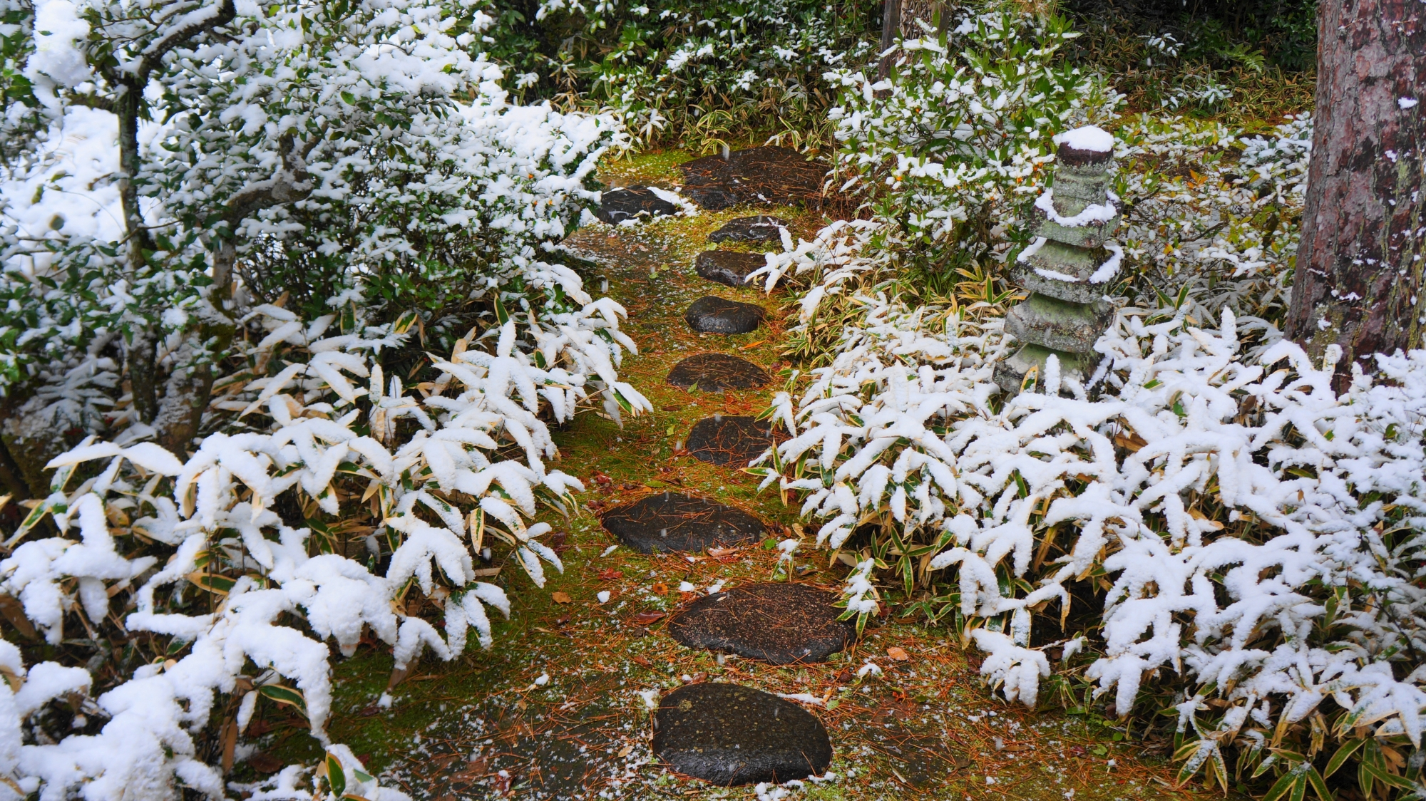 高桐院の苔と飛び石の雪景色