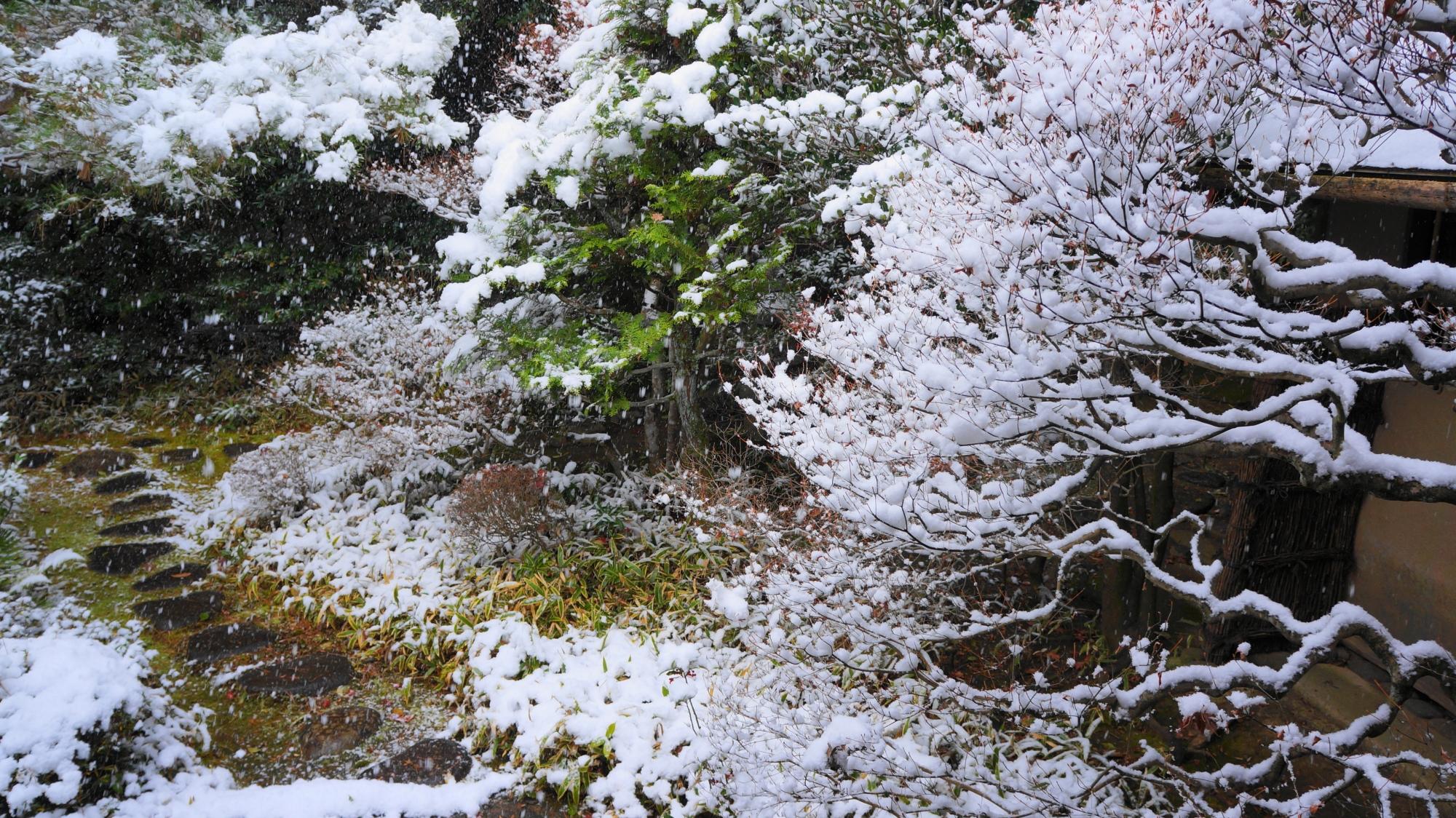 芸術的な雪の花が咲く高桐院
