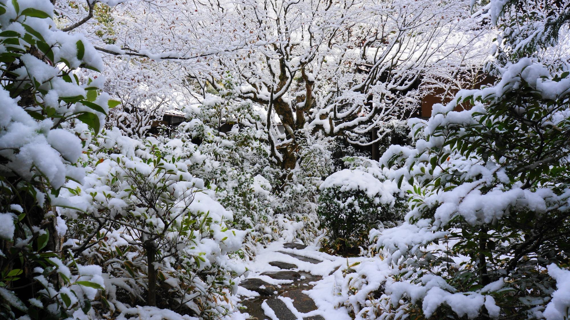 多種多様な木々や植物の見事な雪の花
