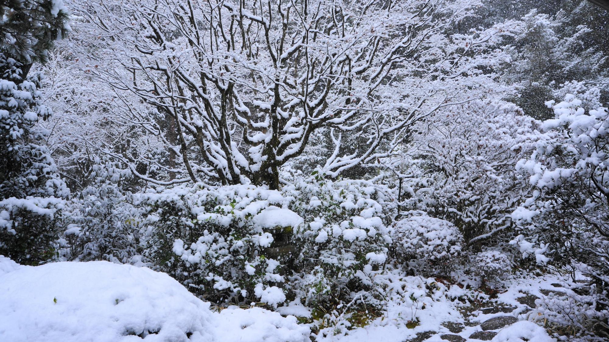 高桐院の書院「意北軒」の南庭の雪景色