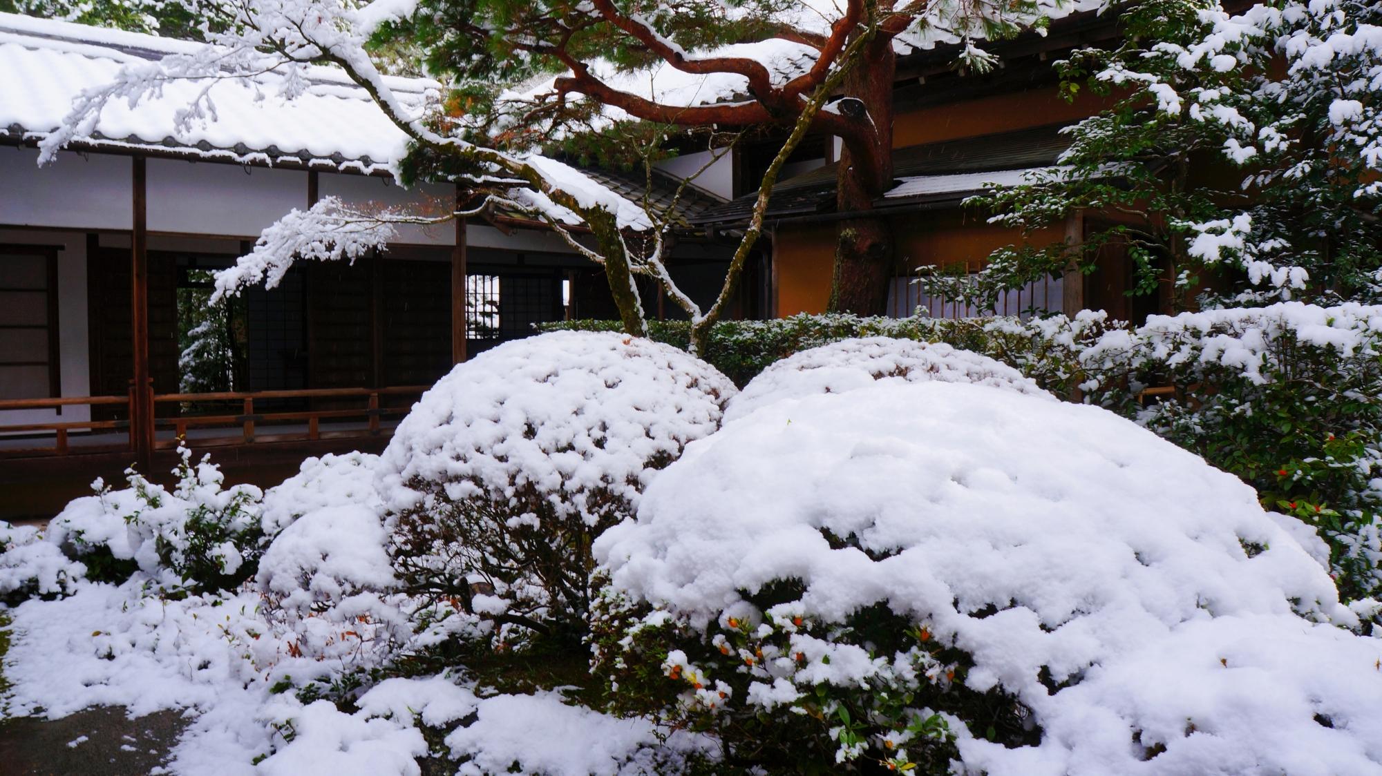 雪がてんこ盛りの刈り込み