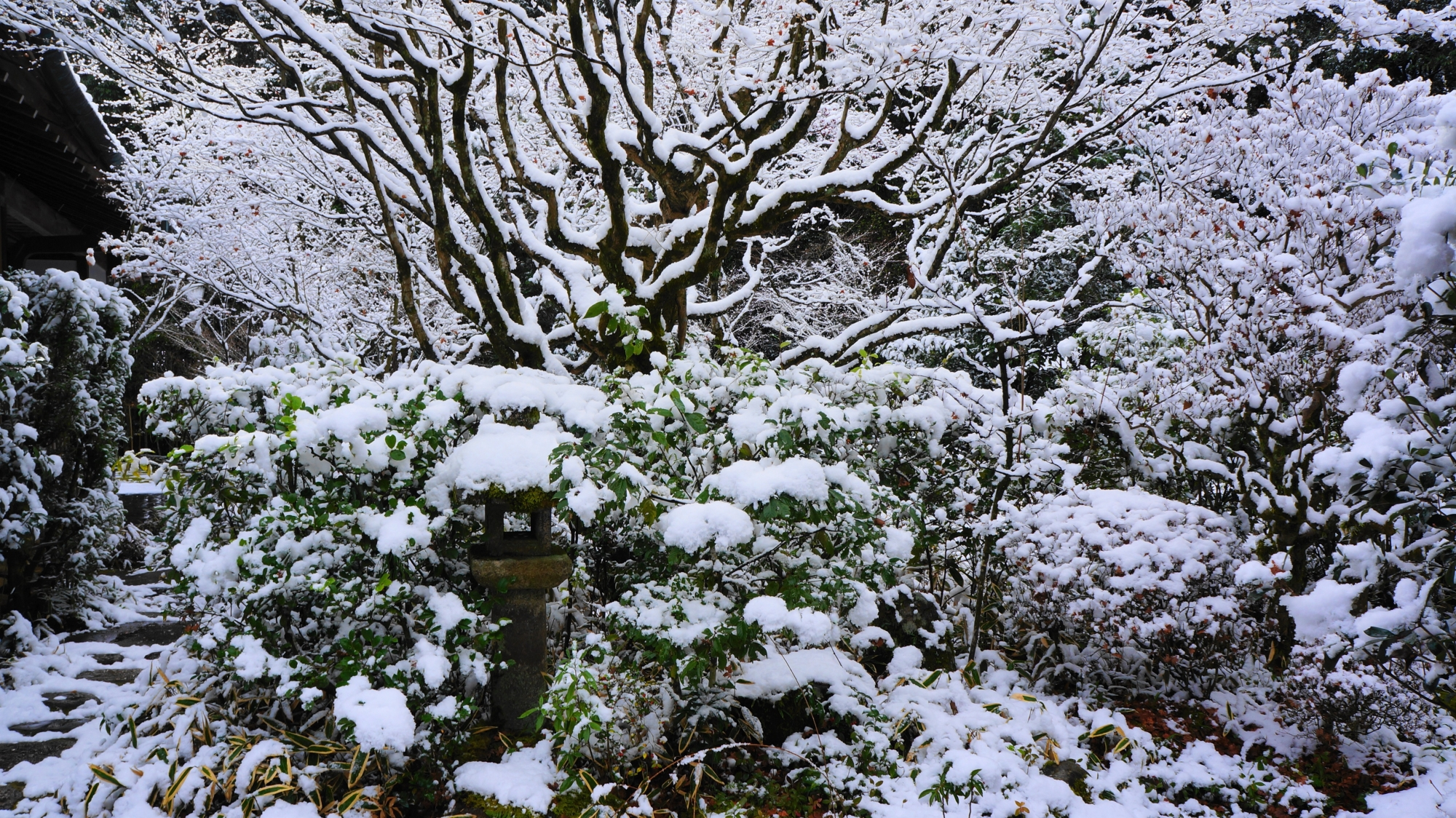 高桐院の自然の作り出す芸術的な雪景色