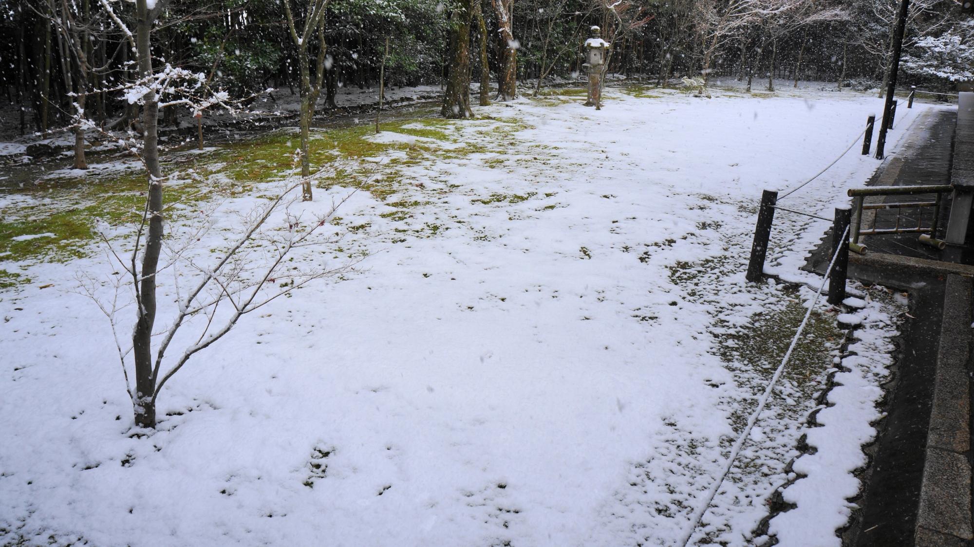 白くそまった一面苔の庭園