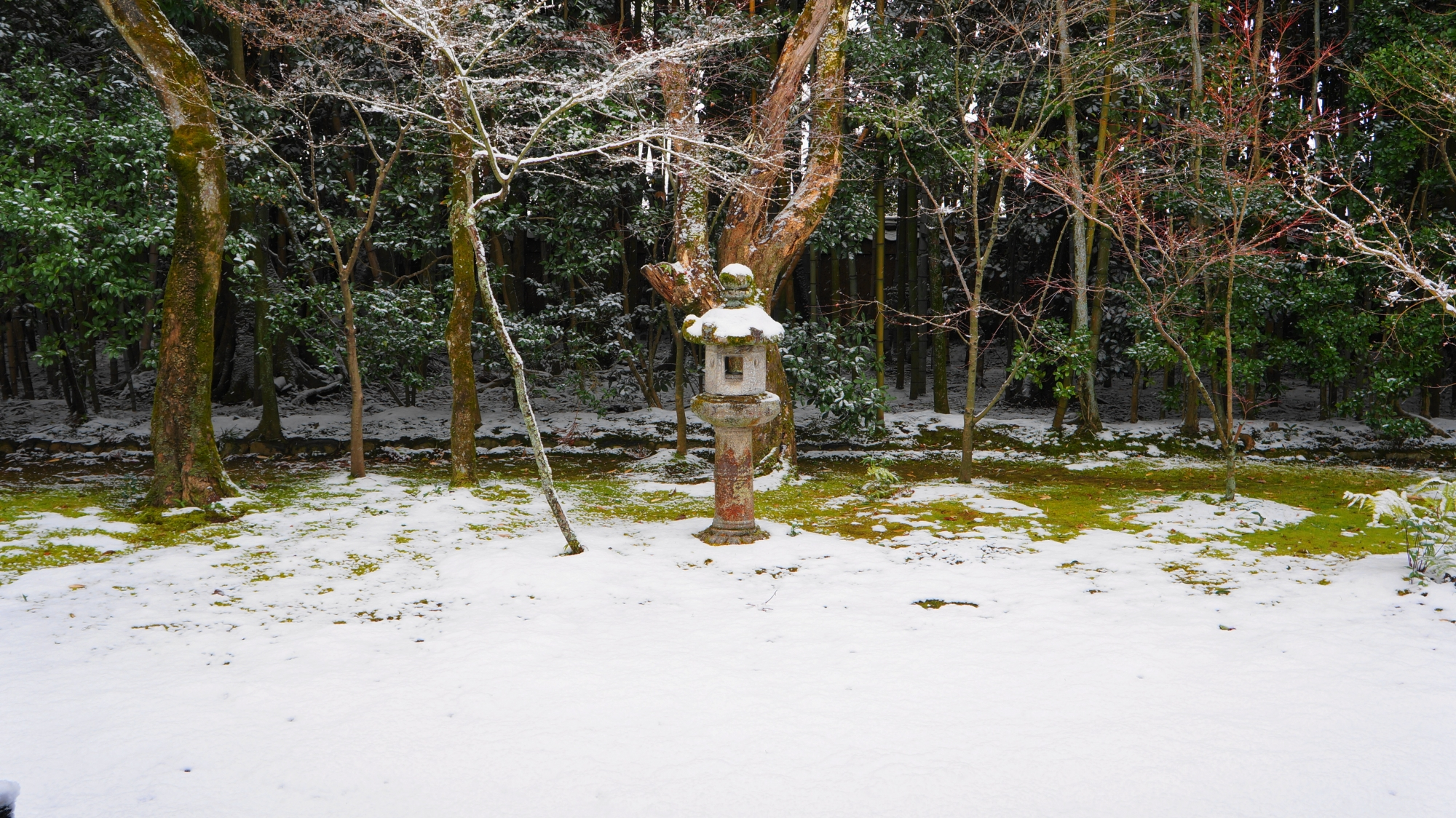 高桐院の静寂につつまれた雪景色