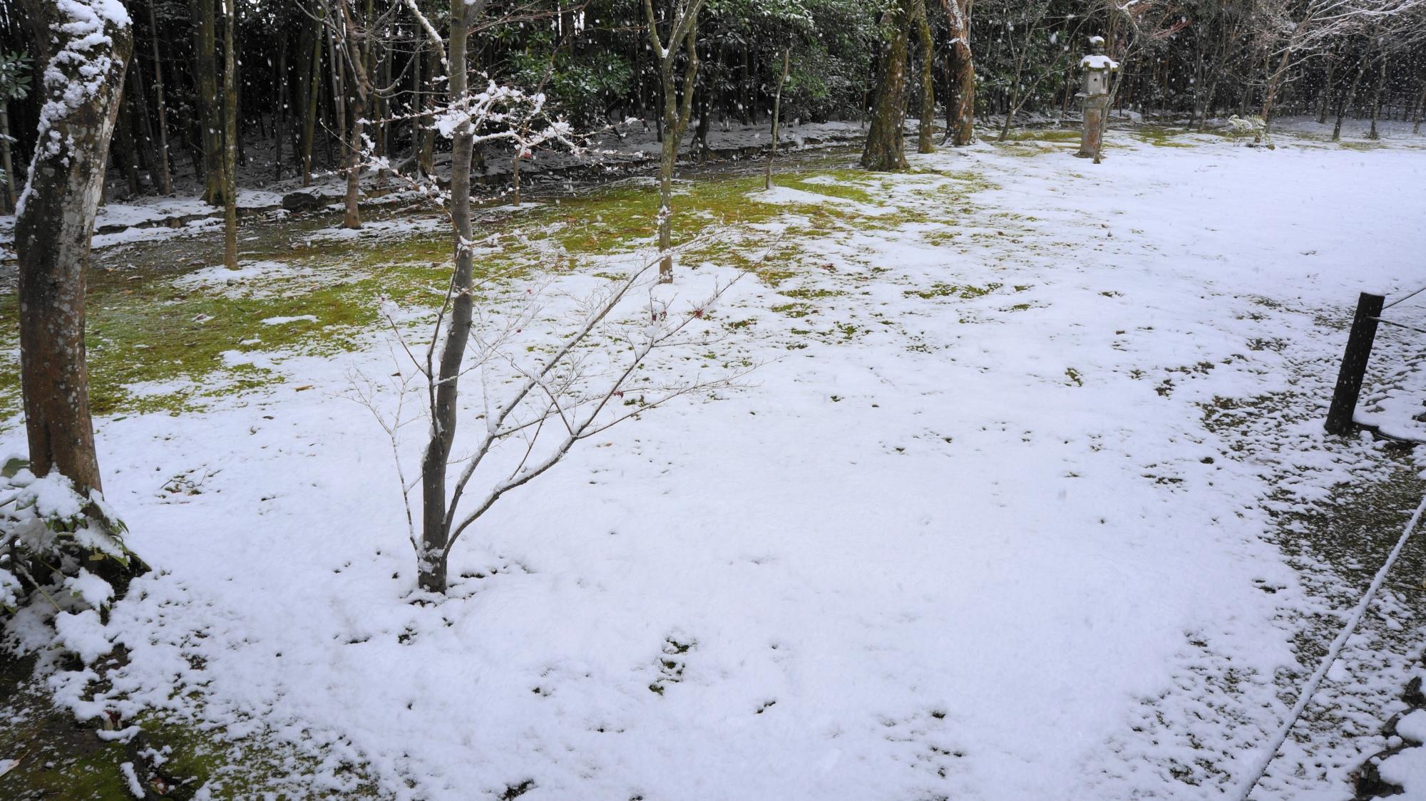 白く雪化粧した美しい苔の庭園