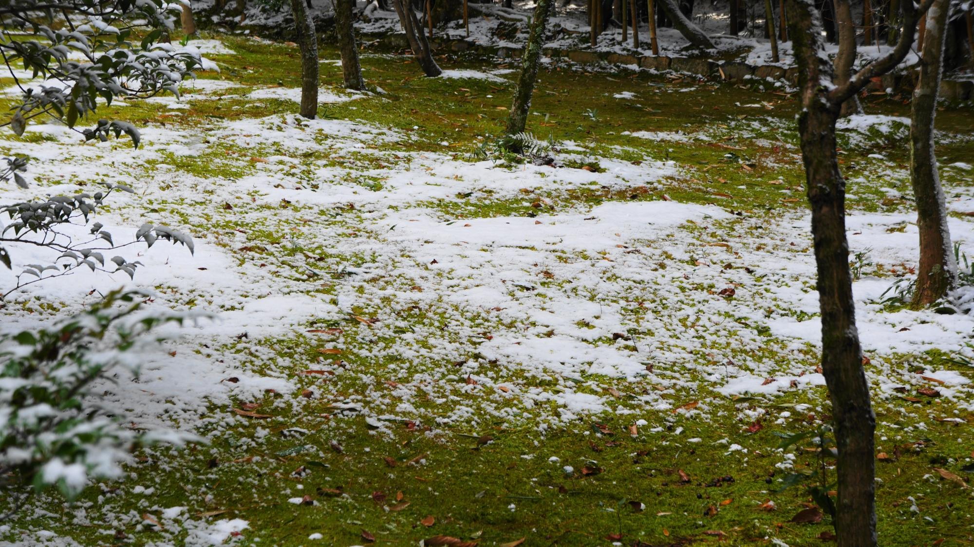 綺麗な苔の緑と雪の白のコントラスト