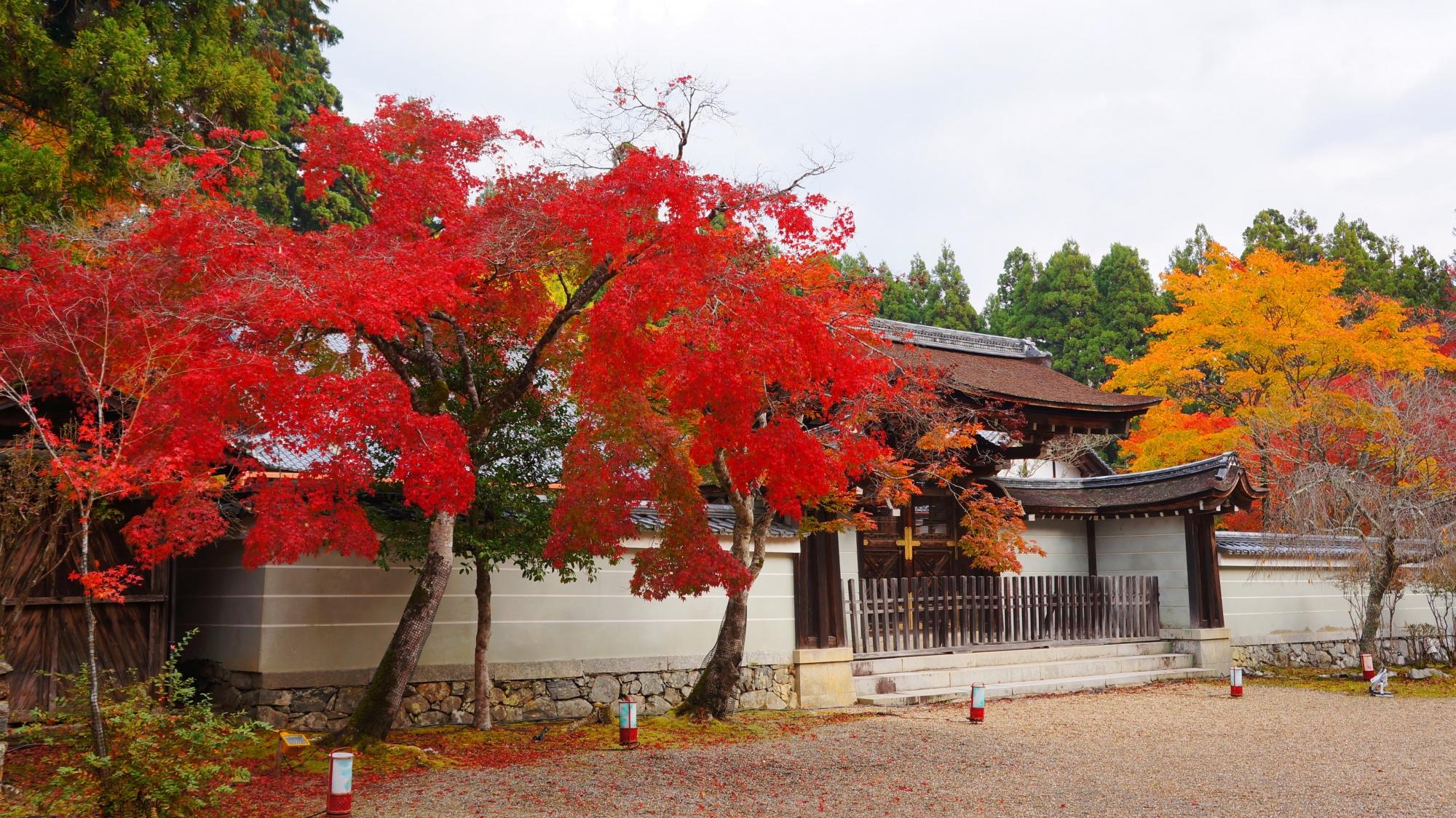 神護寺の唐門と多彩な紅葉
