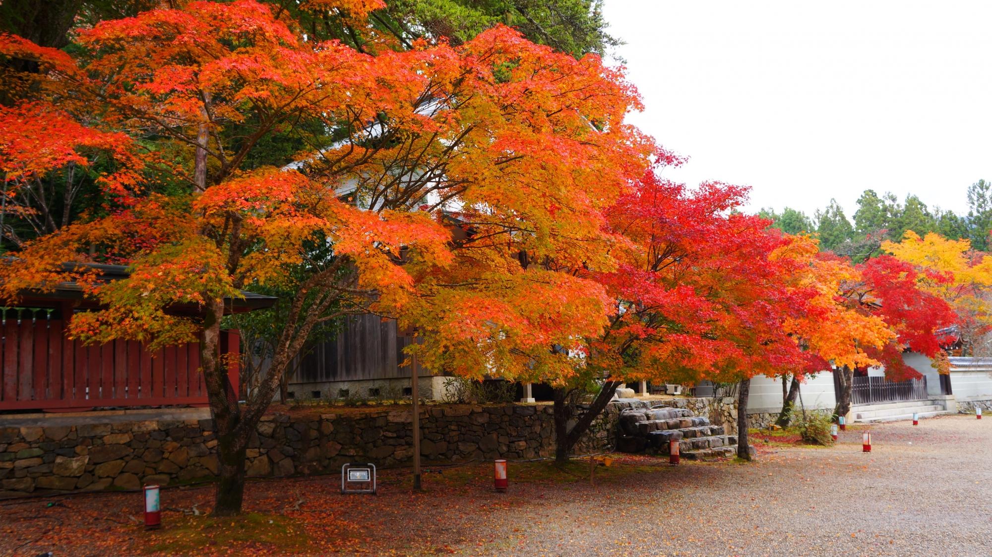 多彩な紅葉に彩られる秋の神護寺