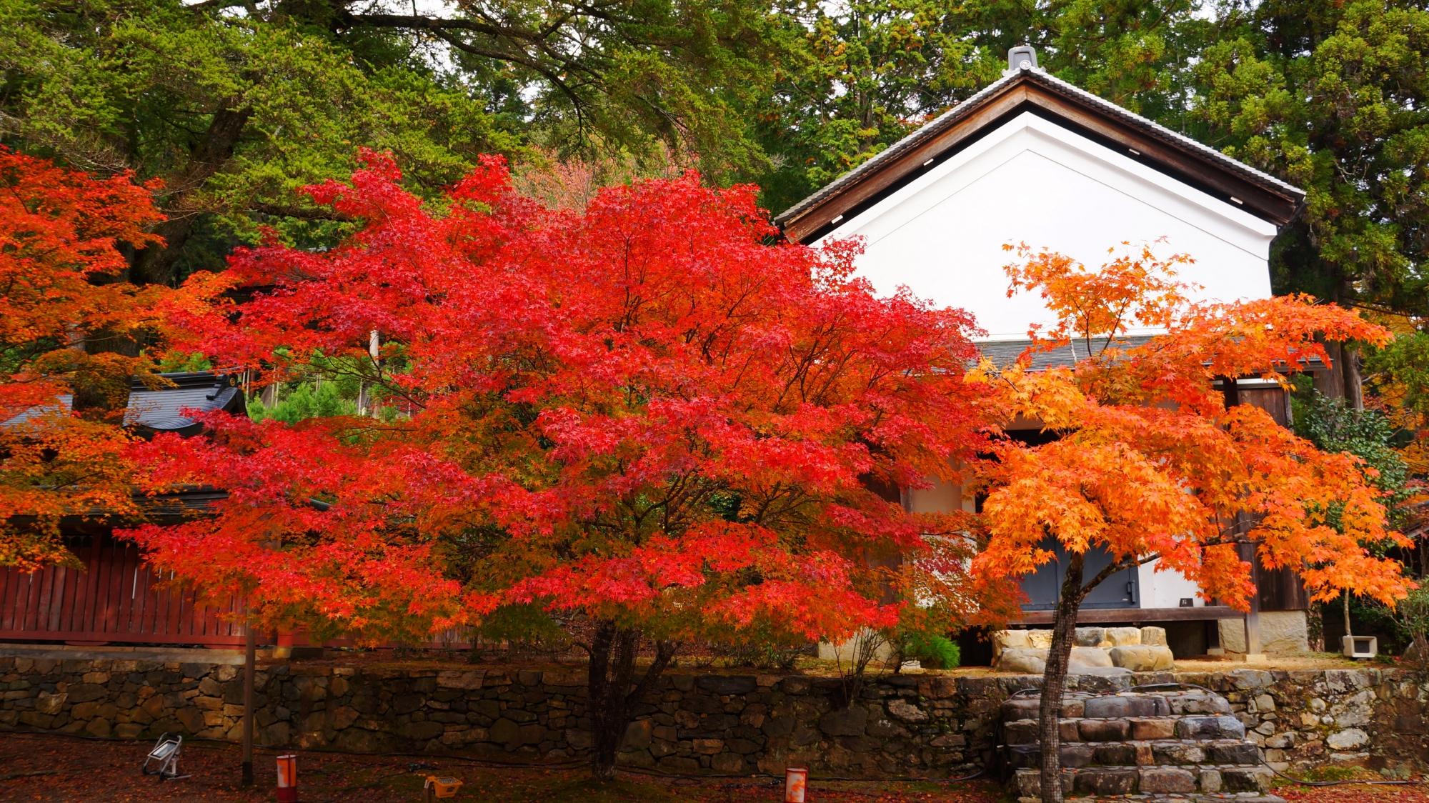 赤やオレンジなどの色とりどりの紅葉で溢れる神護寺