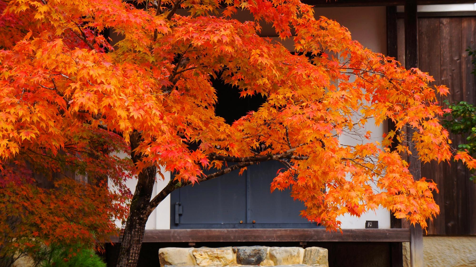 淡く光るような色合いの見事な発色の紅葉