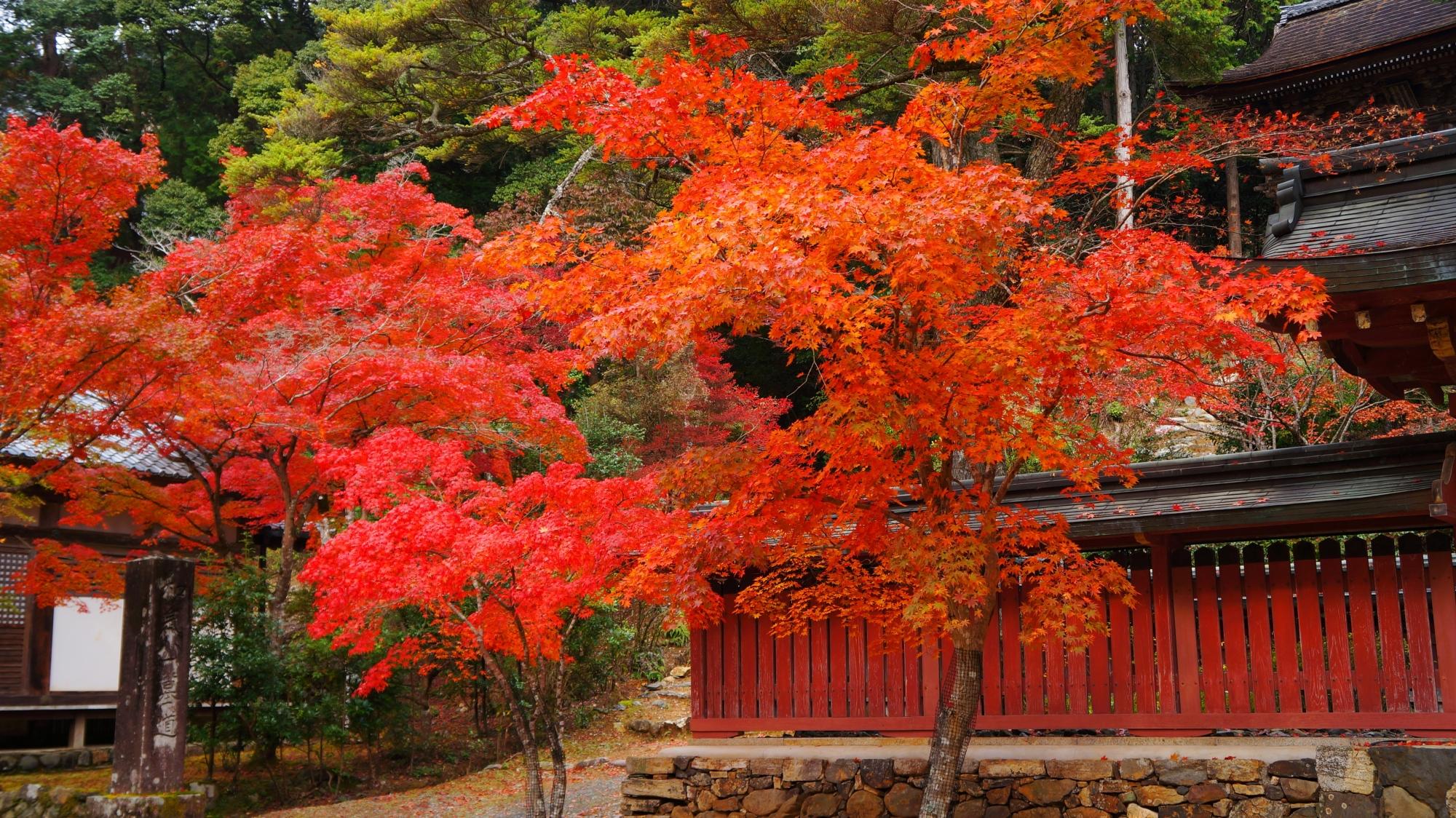 神護寺の色づくオレンジ系の紅葉