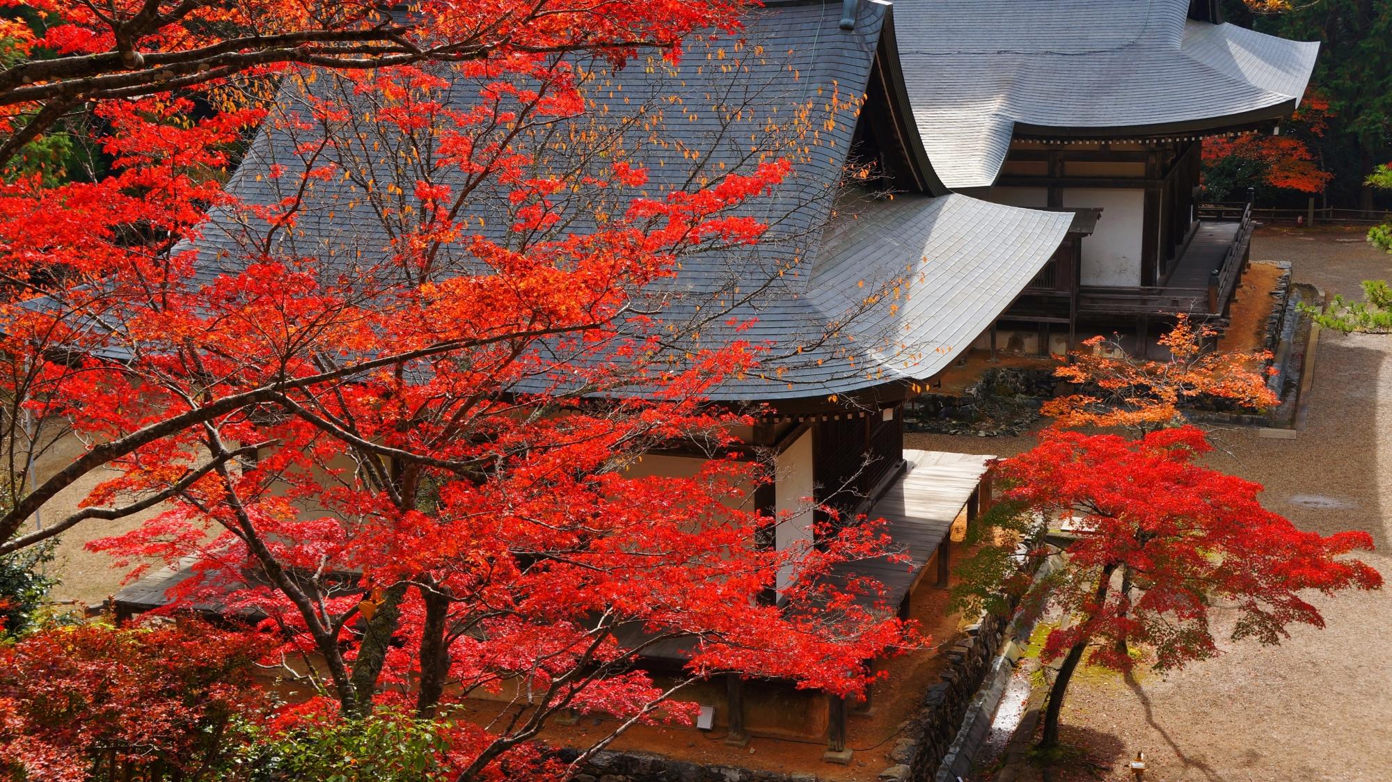 雄大な伽藍を華やぐ鮮やかな紅葉