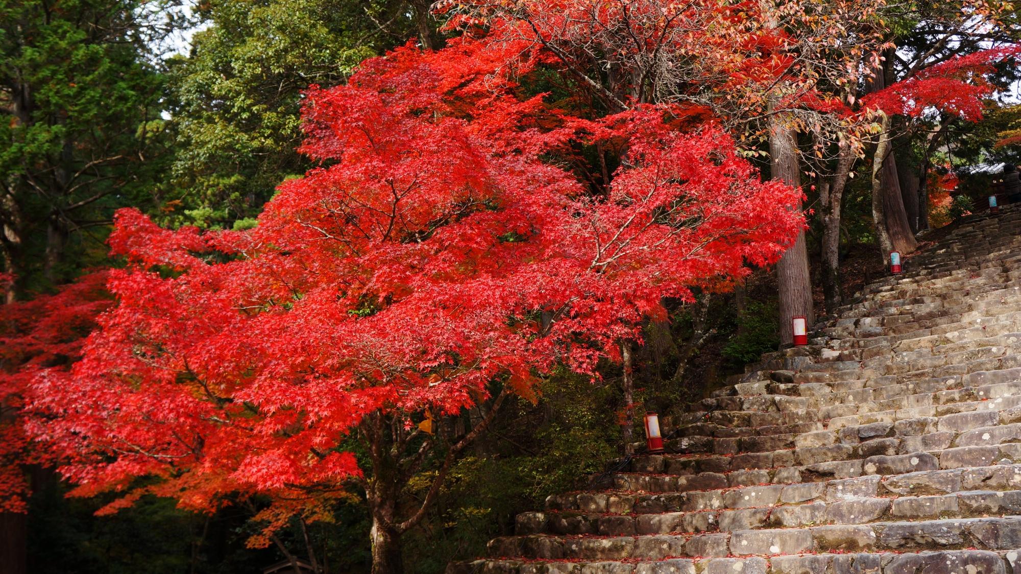 風情ある石段を覆うように枝を伸ばす紅葉